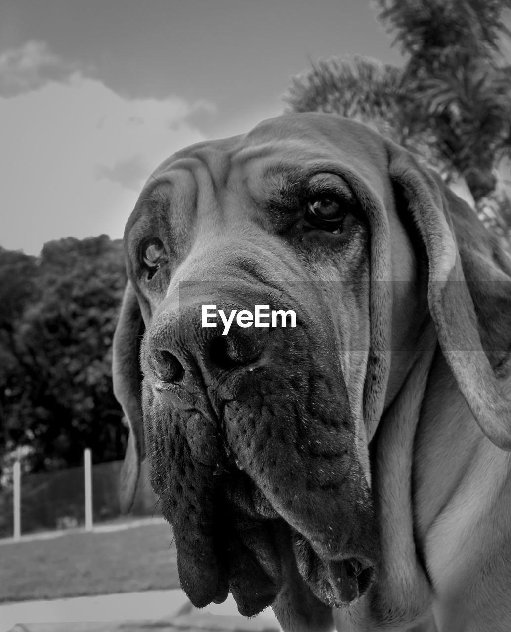 pets, domestic, one animal, dog, canine, domestic animals, mammal, animal themes, animal, close-up, vertebrate, focus on foreground, portrait, animal body part, no people, looking at camera, animal head, day, looking, snout, animal mouth, animal nose