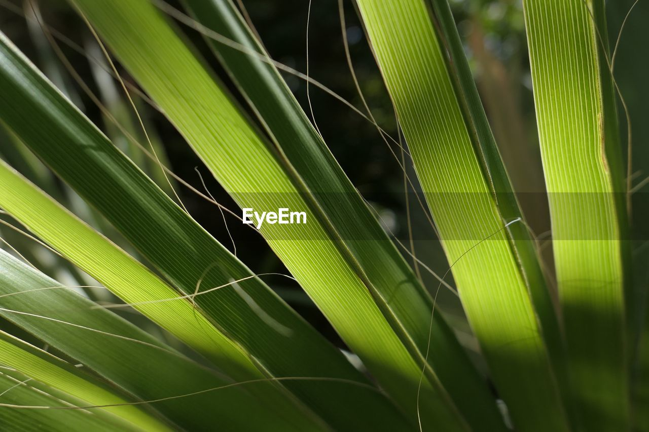 green color, growth, plant, leaf, close-up, beauty in nature, plant part, nature, day, no people, outdoors, freshness, selective focus, full frame, natural pattern, fragility, vulnerability, focus on foreground, backgrounds, tranquility, palm leaf, blade of grass
