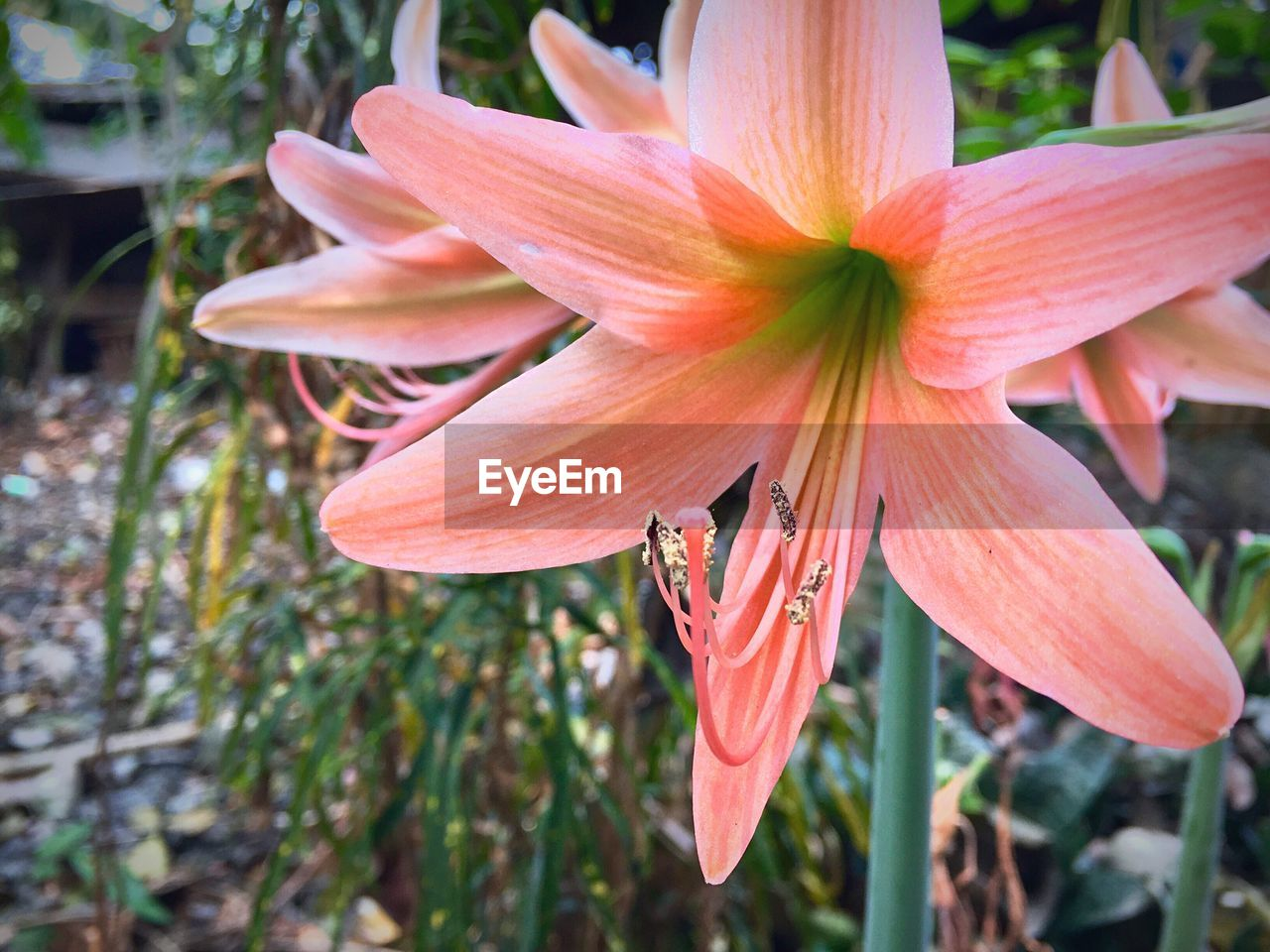 flower, petal, growth, flower head, fragility, nature, beauty in nature, blooming, freshness, plant, day, outdoors, no people, close-up, day lily, focus on foreground