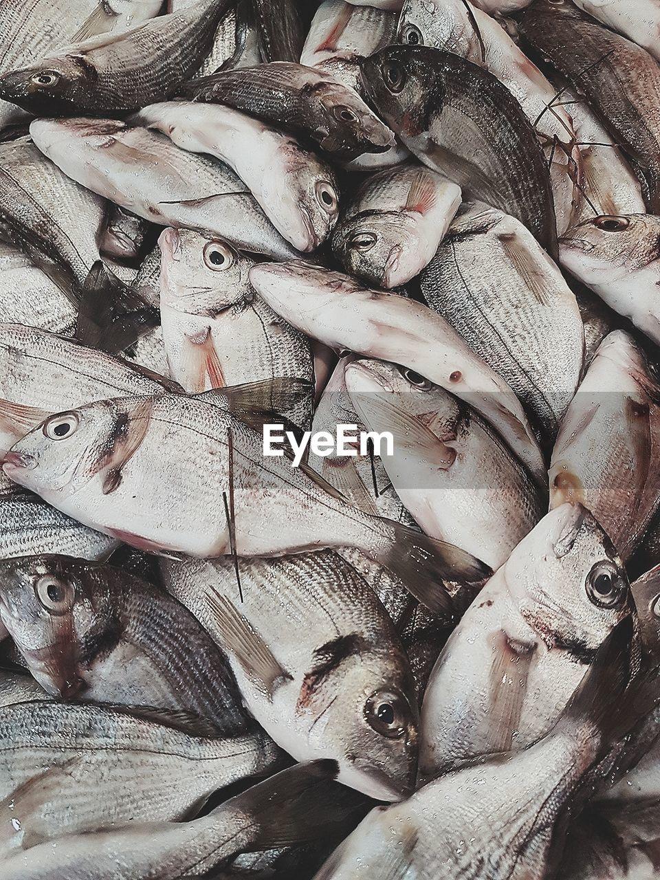 Full Frame Shot Of Fishes For Sale In Market