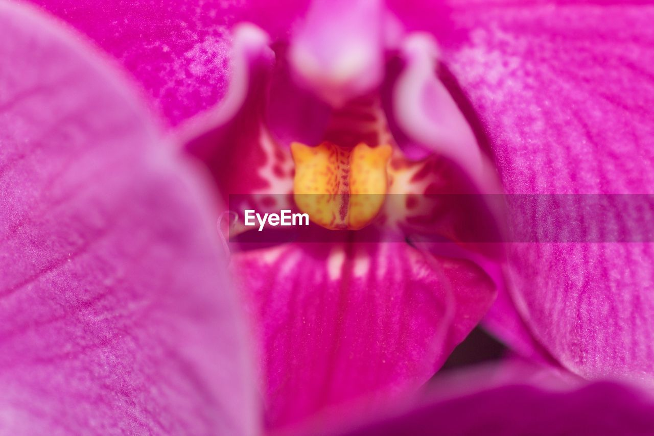 flowering plant, flower, petal, fragility, vulnerability, freshness, flower head, beauty in nature, inflorescence, plant, close-up, pollen, pink color, growth, nature, no people, full frame, backgrounds, selective focus, purple