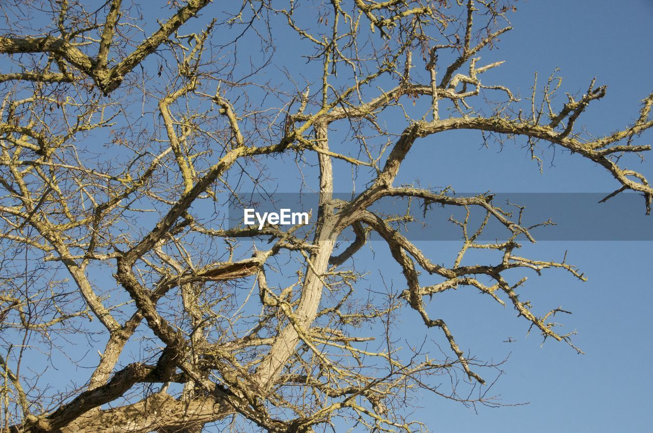 branch, tree, nature, day, outdoors, no people, low angle view, bare tree, beauty in nature, growth, blue, sky, clear sky, close-up