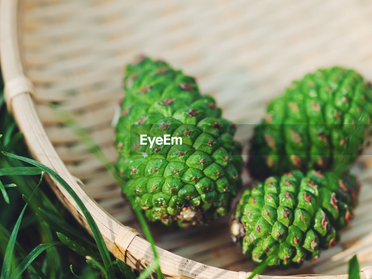 Close-Up Of Green Pine Cones In Basket