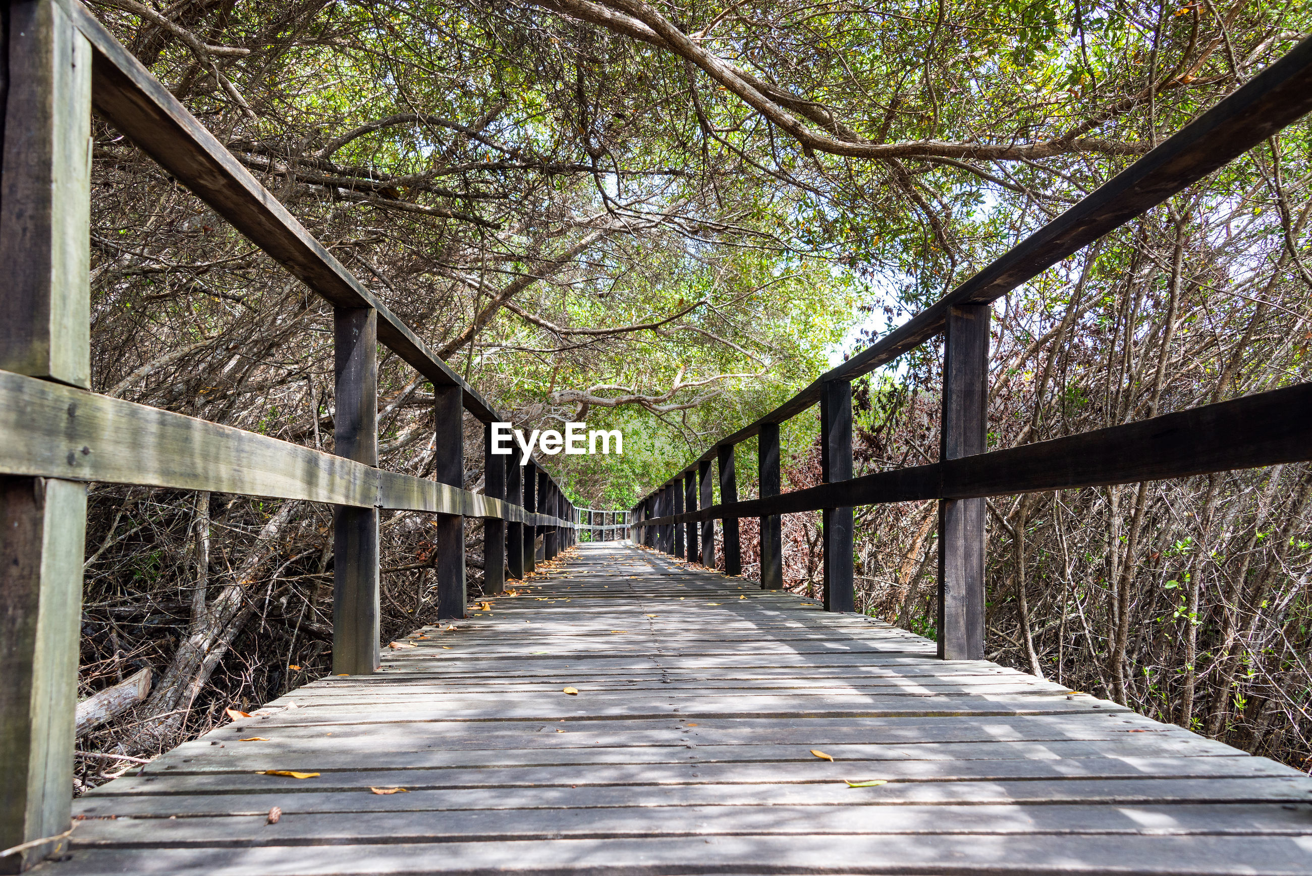 Empty boardwalk amidst trees at forest