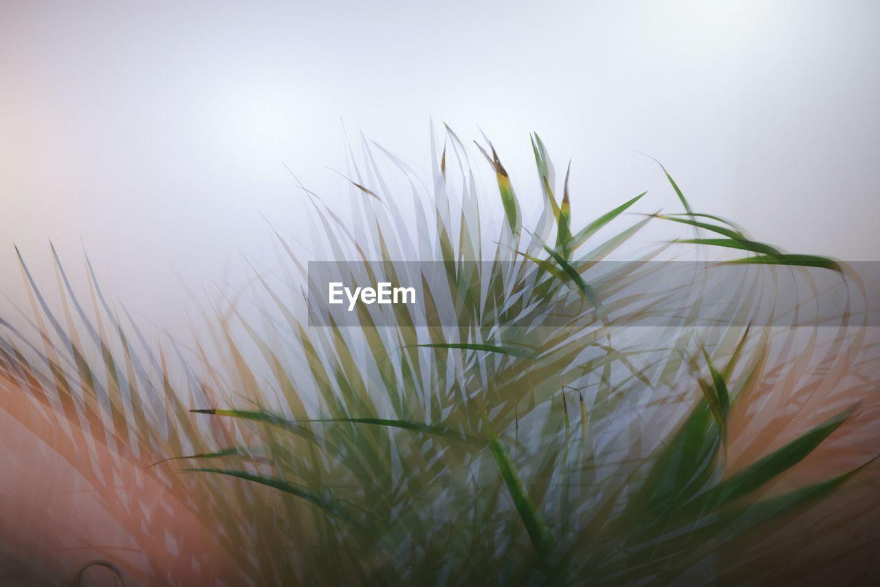Close-Up Of Blade Of Grass Against Sky