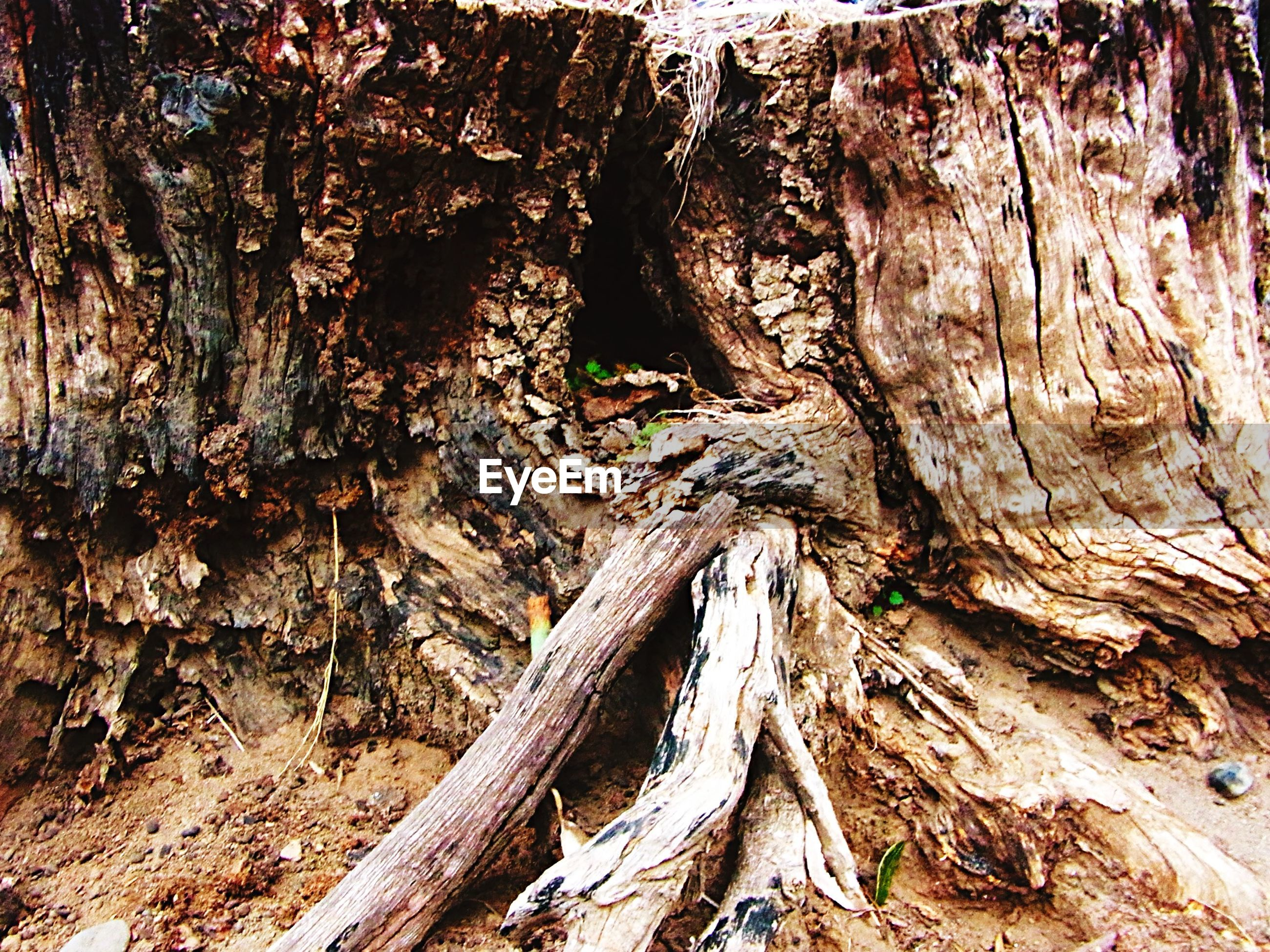 tree trunk, textured, tree, rough, nature, wood - material, bark, close-up, natural pattern, day, forest, outdoors, tranquility, rock - object, log, no people, root, rock formation, backgrounds, dead plant