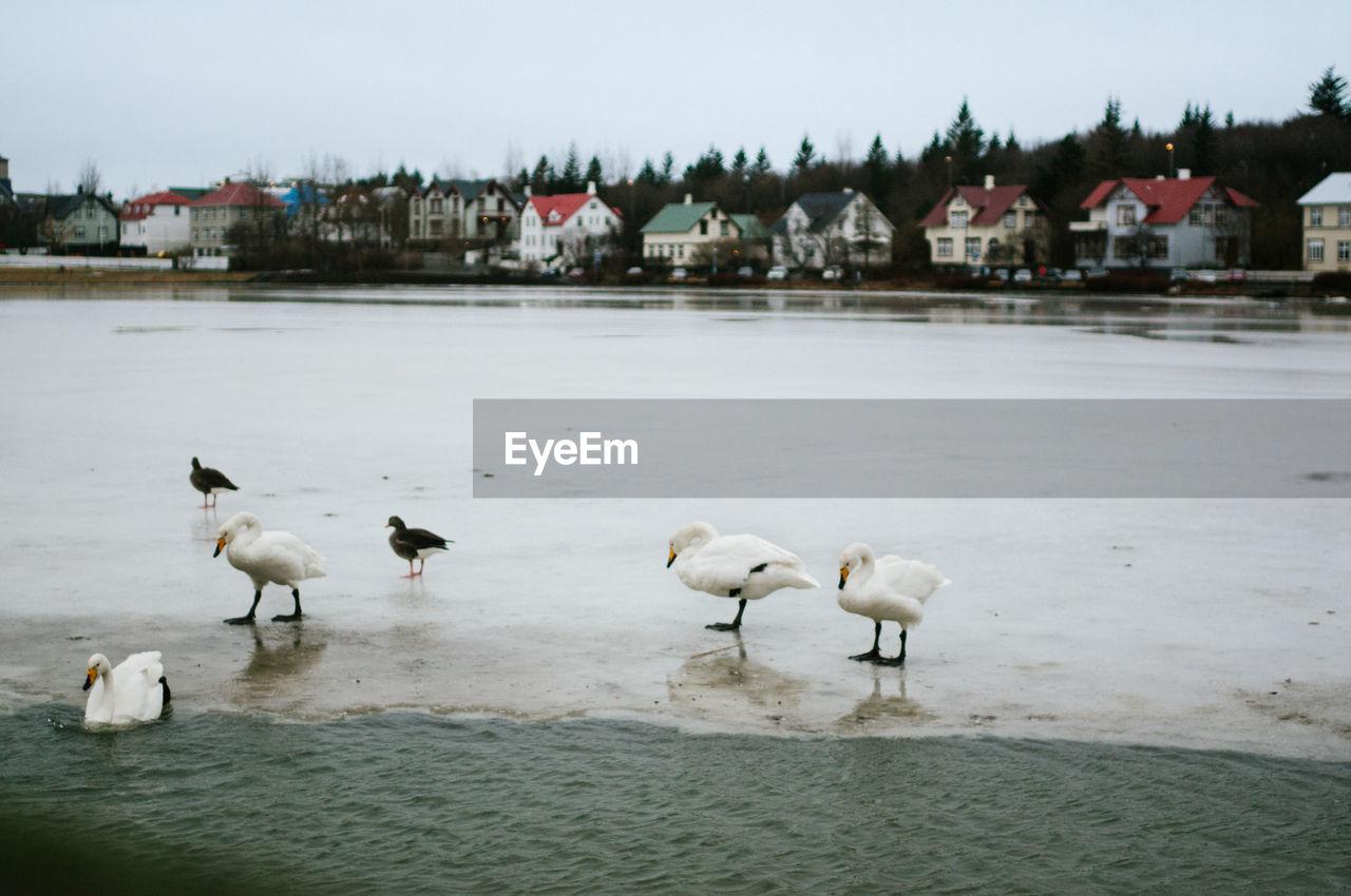 Birds On Lakeshore Against Sky