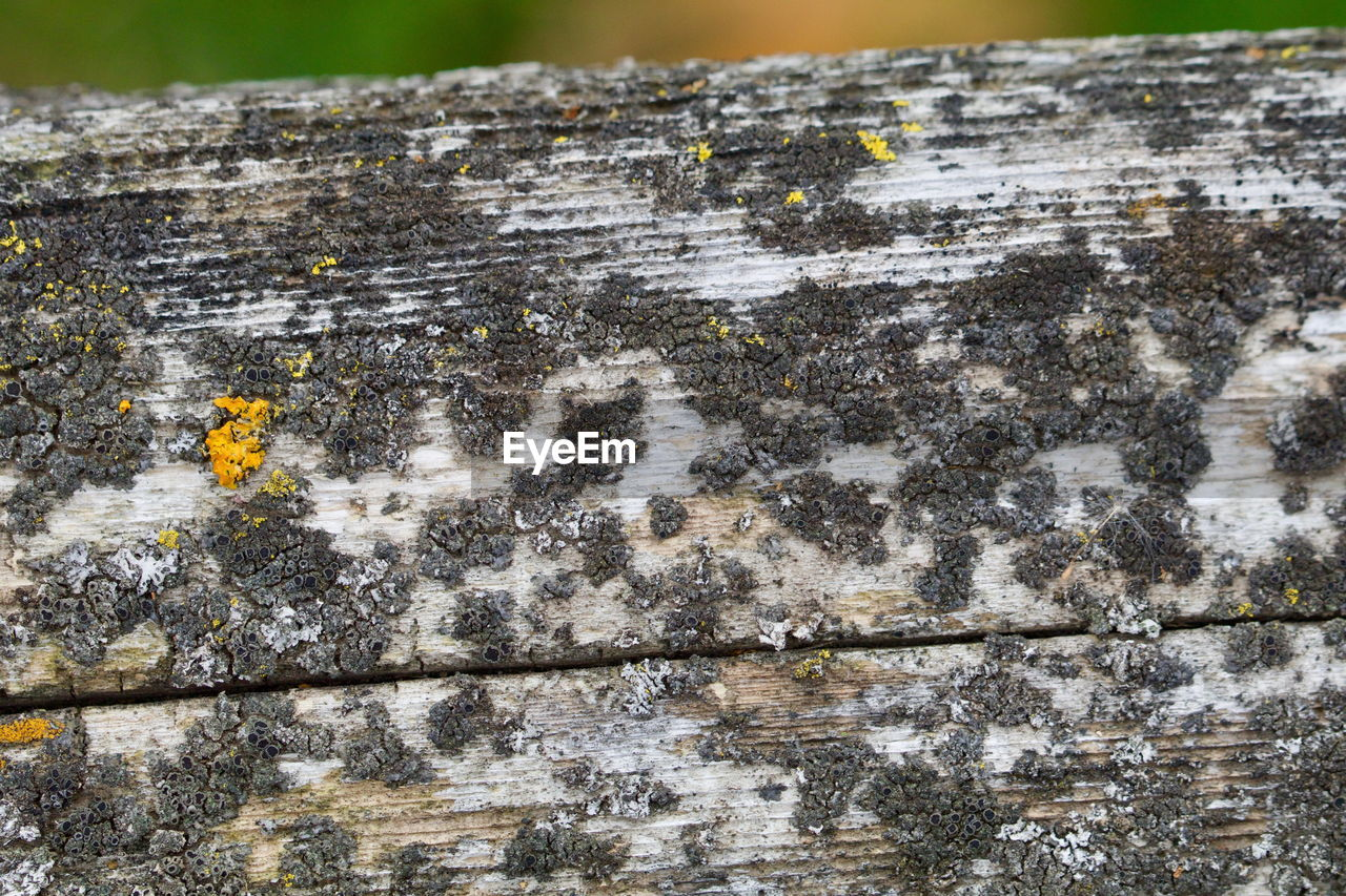 CLOSE-UP OF WOOD ON TREE TRUNK