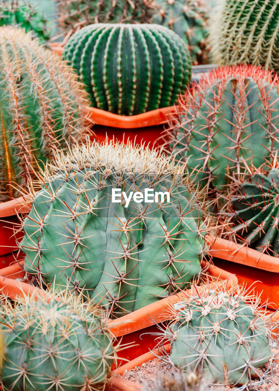 succulent plant, cactus, thorn, growth, plant, sharp, green color, spiked, barrel cactus, day, nature, no people, close-up, potted plant, beauty in nature, field, outdoors, natural pattern, high angle view, land, flower pot