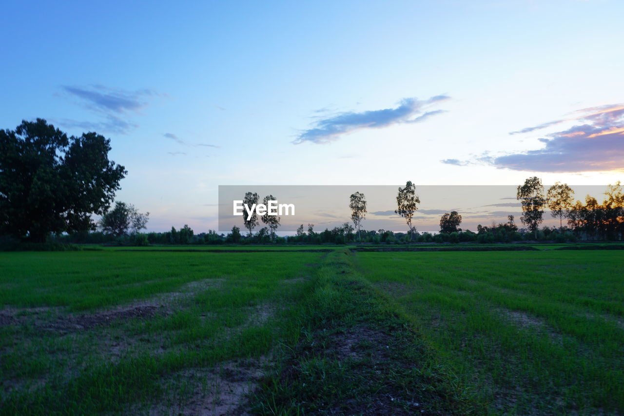 plant, sky, tree, tranquility, tranquil scene, scenics - nature, landscape, beauty in nature, environment, grass, cloud - sky, field, land, growth, nature, green color, no people, non-urban scene, rural scene, idyllic, outdoors