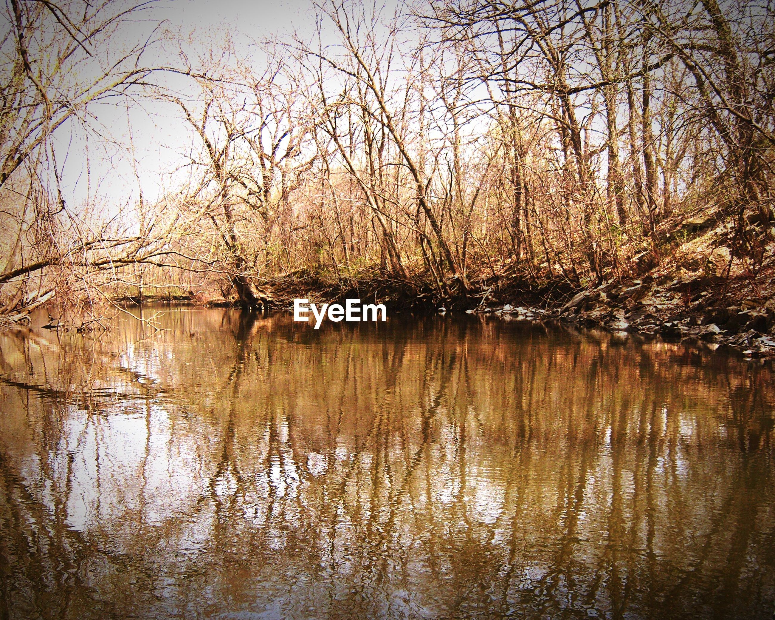 River by bare trees in forest