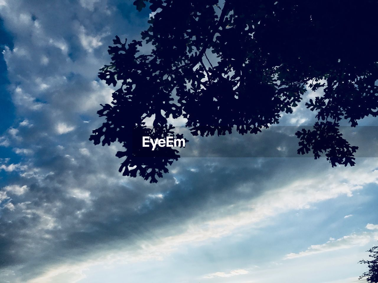 sky, nature, beauty in nature, low angle view, cloud - sky, tree, scenics, no people, tranquility, outdoors, day, blue, growth, branch