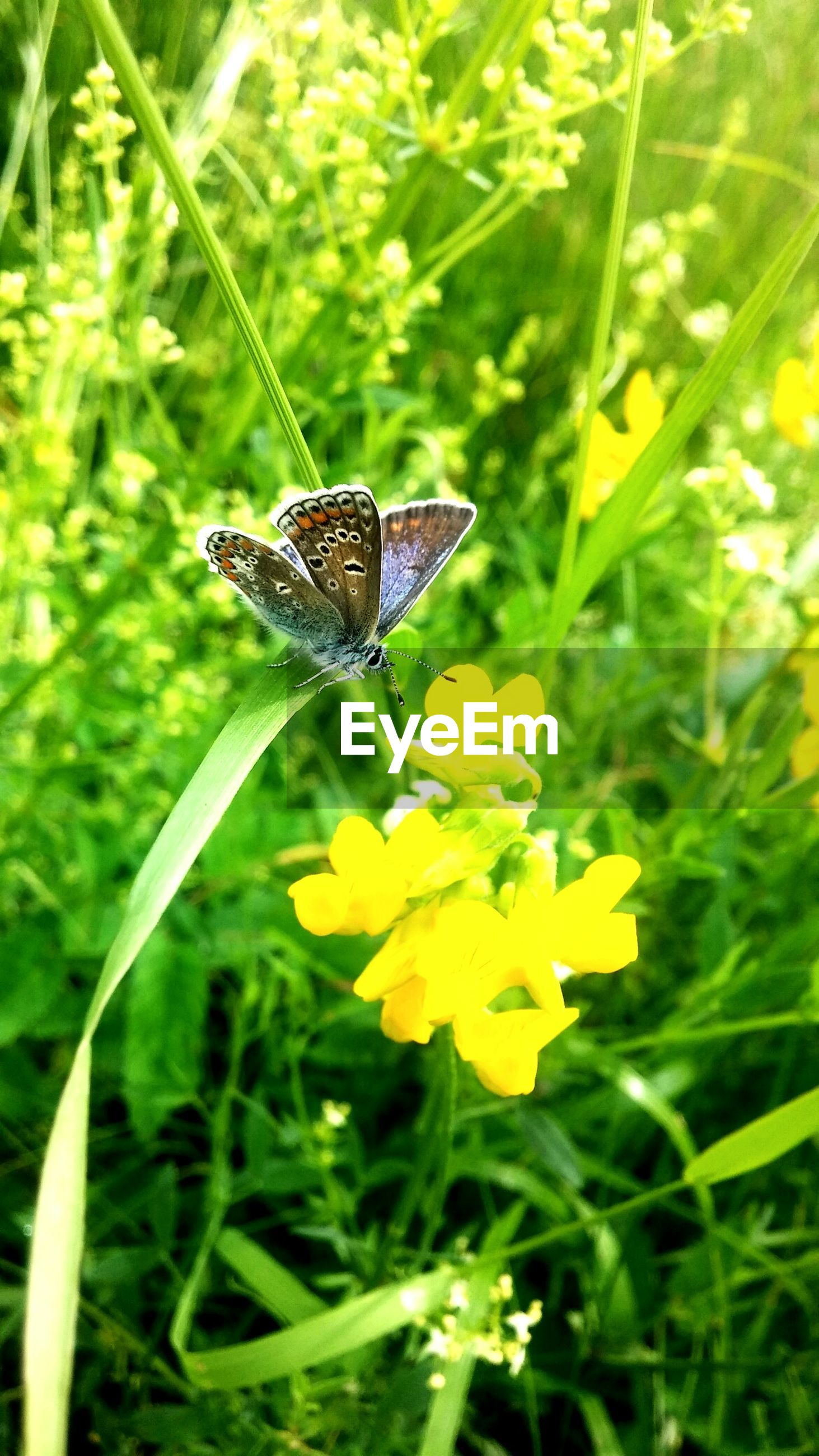 one animal, animals in the wild, animal themes, insect, wildlife, butterfly - insect, butterfly, flower, leaf, plant, green color, growth, beauty in nature, nature, close-up, focus on foreground, yellow, fragility, freshness, animal antenna