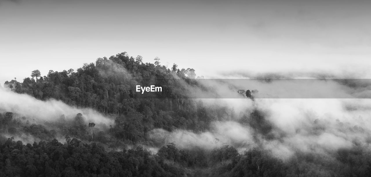 beauty in nature, scenics - nature, sky, tranquil scene, fog, tranquility, tree, plant, no people, mountain, nature, non-urban scene, day, environment, cloud - sky, outdoors, idyllic, majestic, forest, hazy