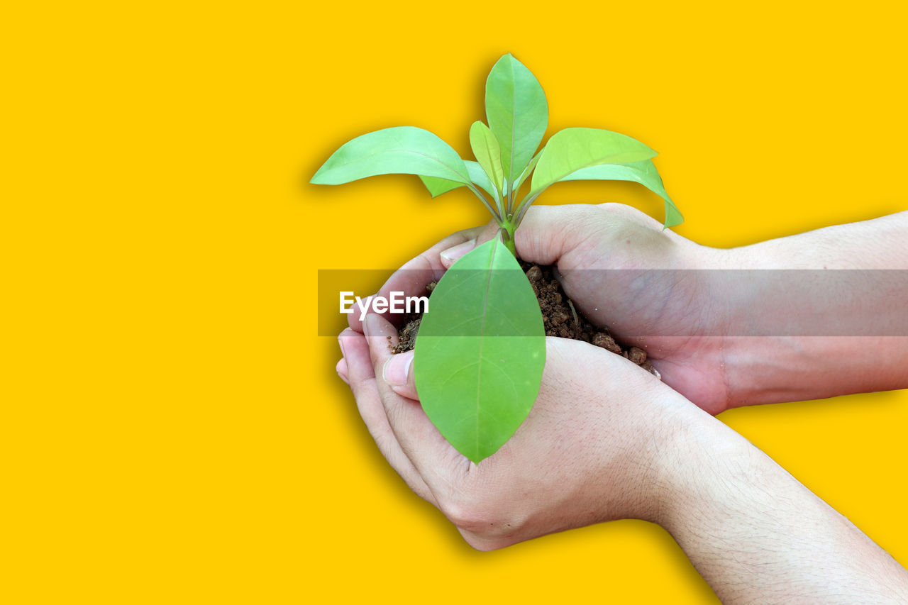 yellow, human hand, hand, holding, green color, human body part, one person, indoors, leaf, yellow background, plant part, studio shot, colored background, close-up, body part, creativity, real people, human finger, finger, leaves