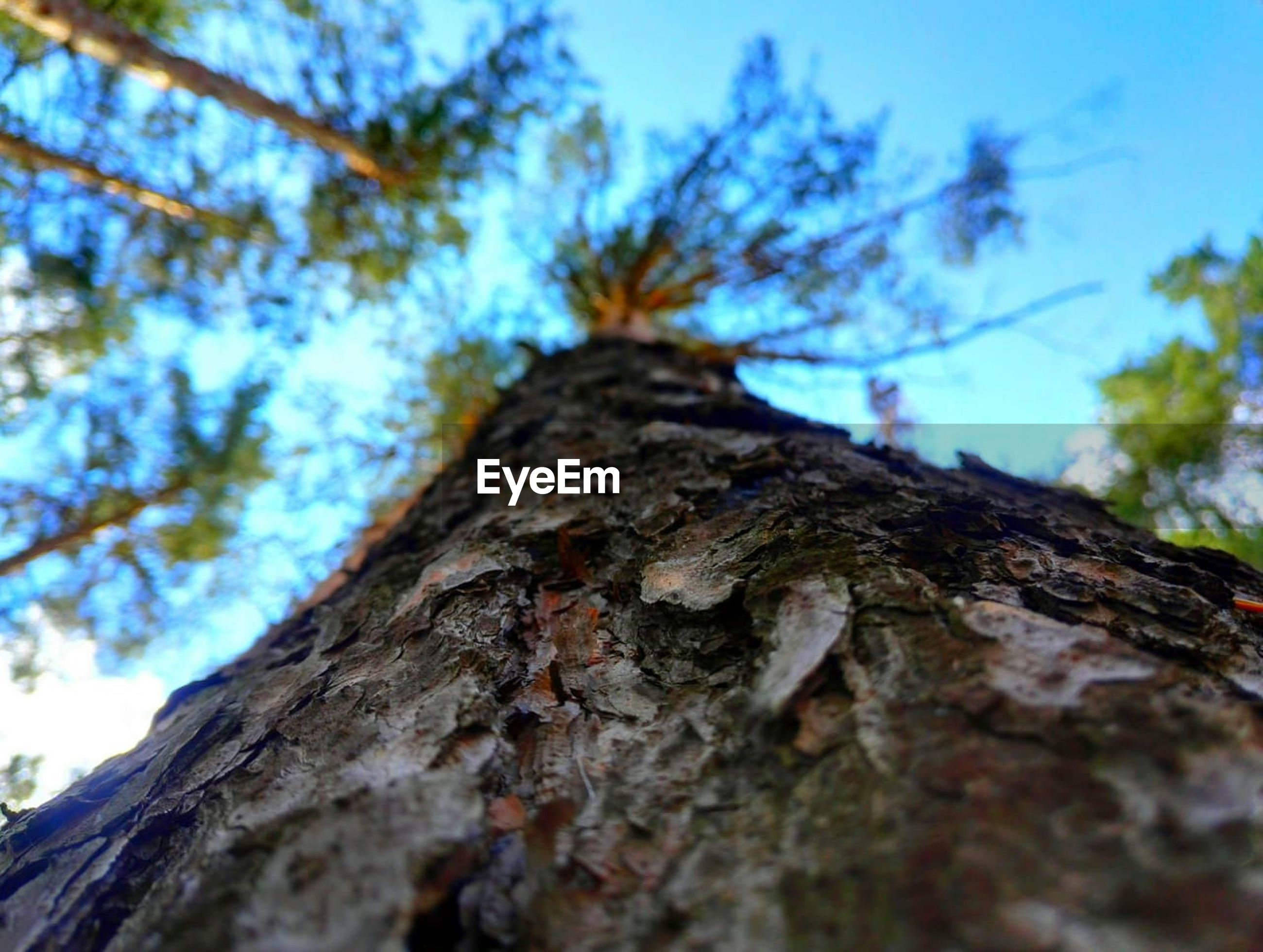 tree, tree trunk, trunk, plant, bark, textured, selective focus, nature, low angle view, growth, sky, branch, day, no people, rough, close-up, wood - material, outdoors, plant bark, focus on foreground, directly below, natural condition, lichen