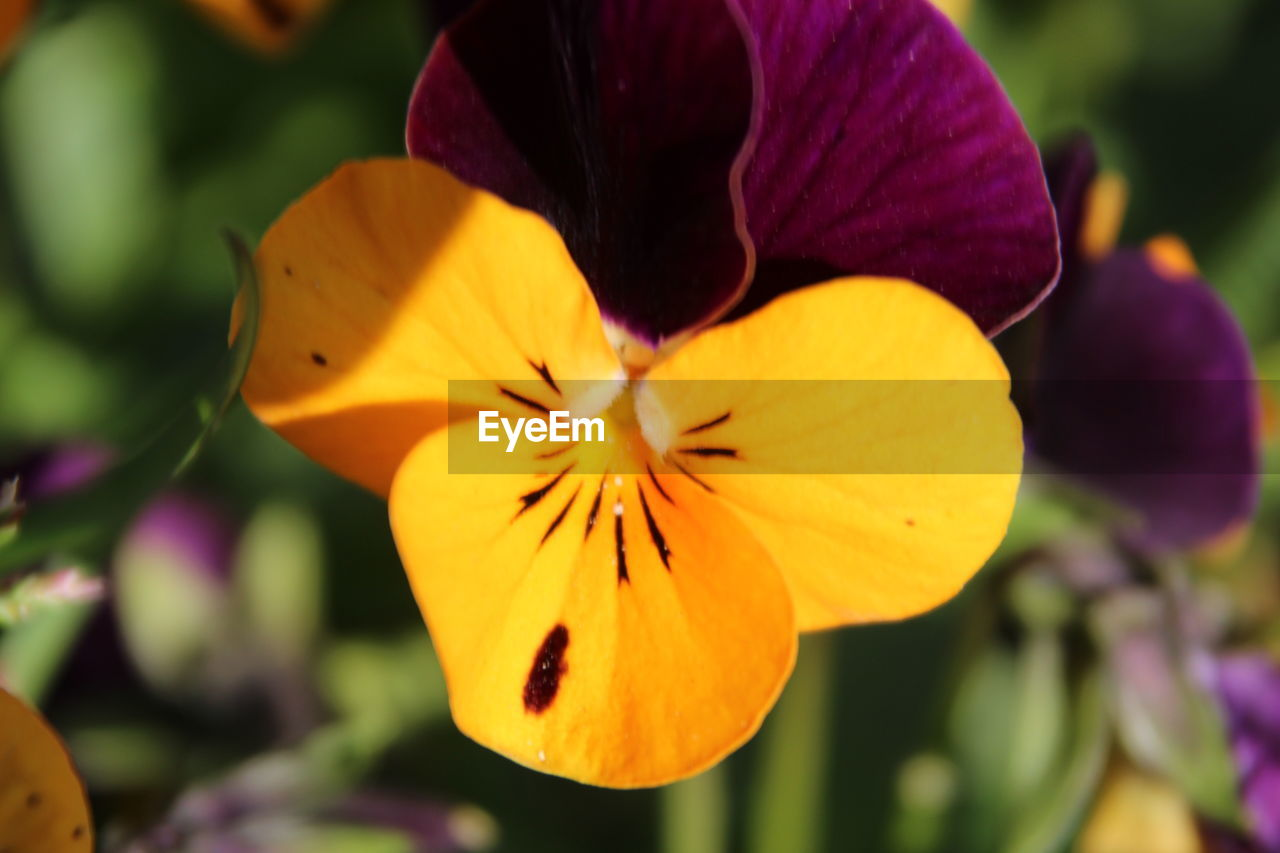 flower, petal, flower head, beauty in nature, fragility, close-up, focus on foreground, nature, yellow, freshness, growth, outdoors, plant, day, no people, blooming