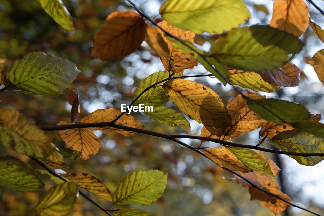 Low Angle View Of Leaves On Branch