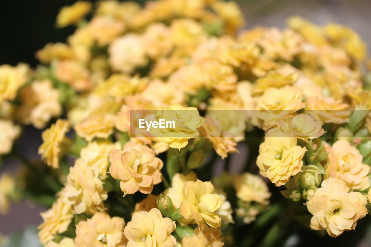 flower, nature, fragility, beauty in nature, petal, no people, plant, growth, flower head, freshness, close-up, day, outdoors
