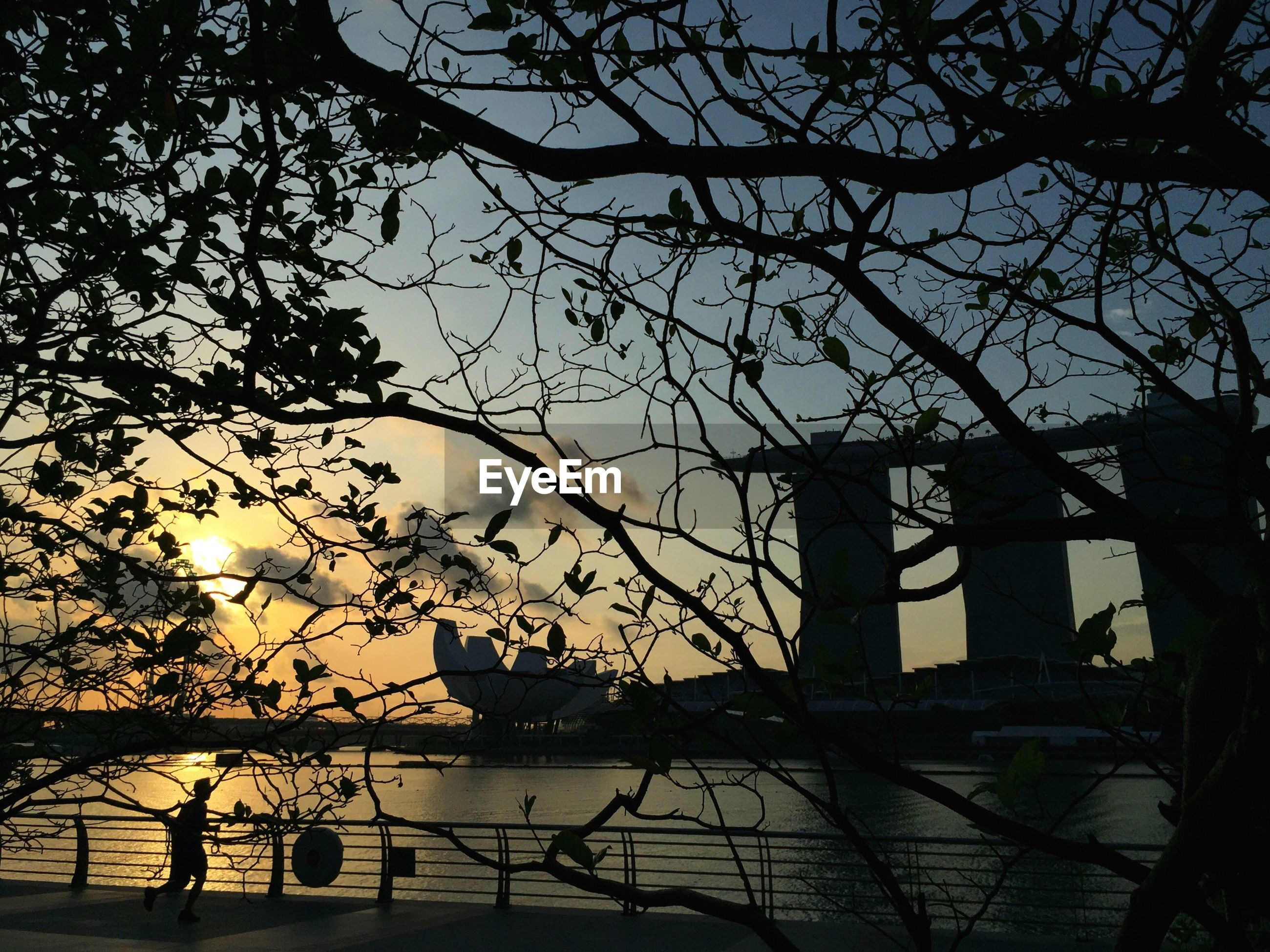 railing, silhouette, tree, branch, water, sky, sunset, bare tree, built structure, river, nature, fence, tranquility, architecture, sunlight, scenics, beauty in nature, bridge - man made structure, tranquil scene, no people