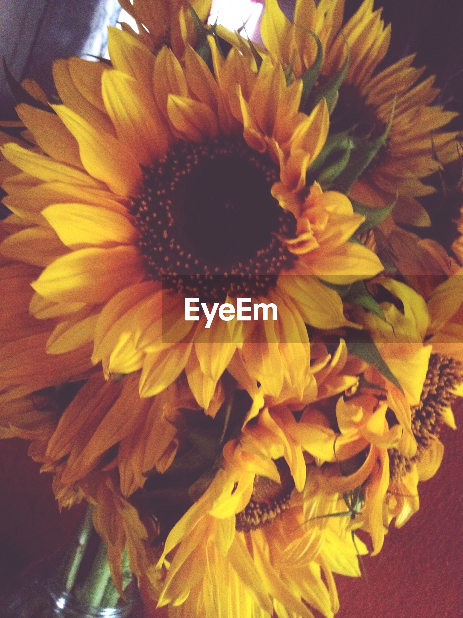 flower, petal, flower head, freshness, fragility, yellow, close-up, beauty in nature, pollen, single flower, nature, growth, sunflower, blooming, indoors, plant, no people, stamen, in bloom, high angle view