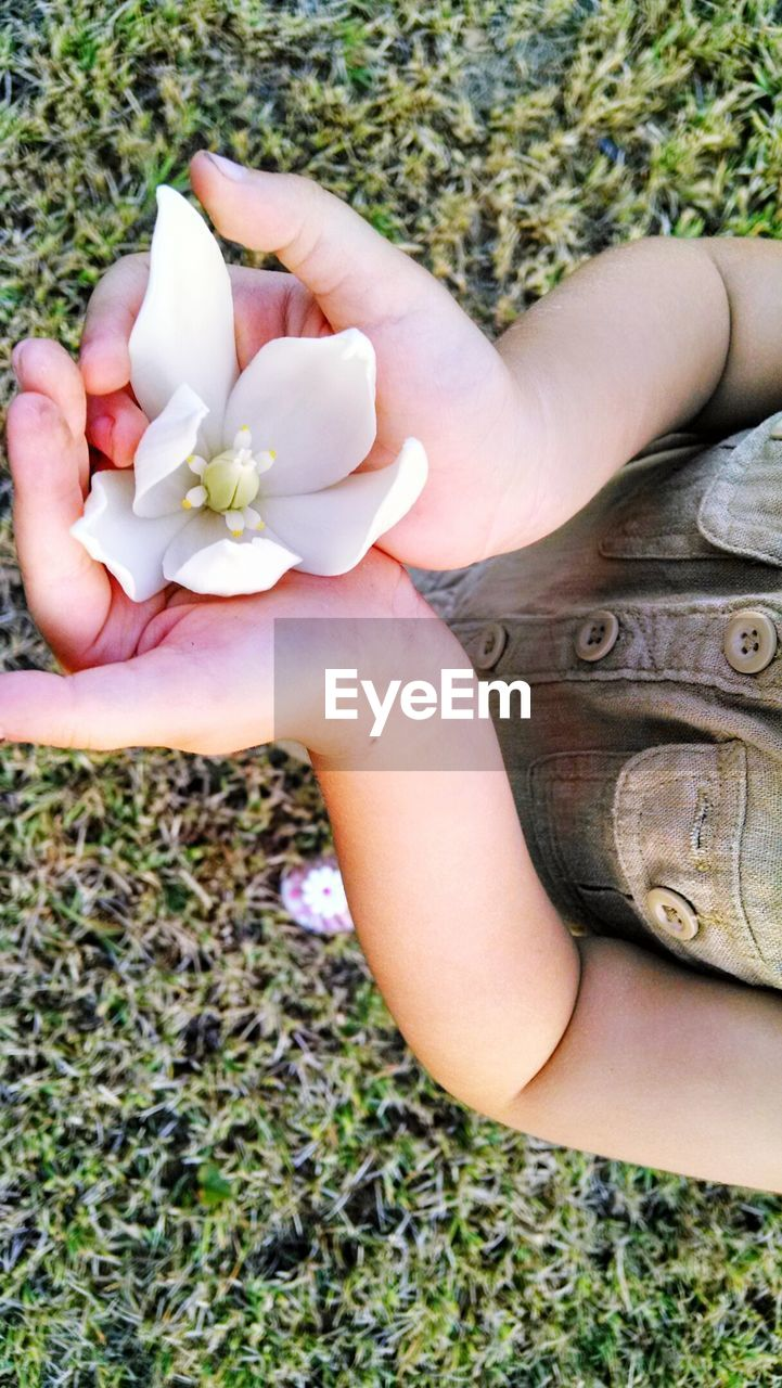 High Angle View Of Girl Holding Flower