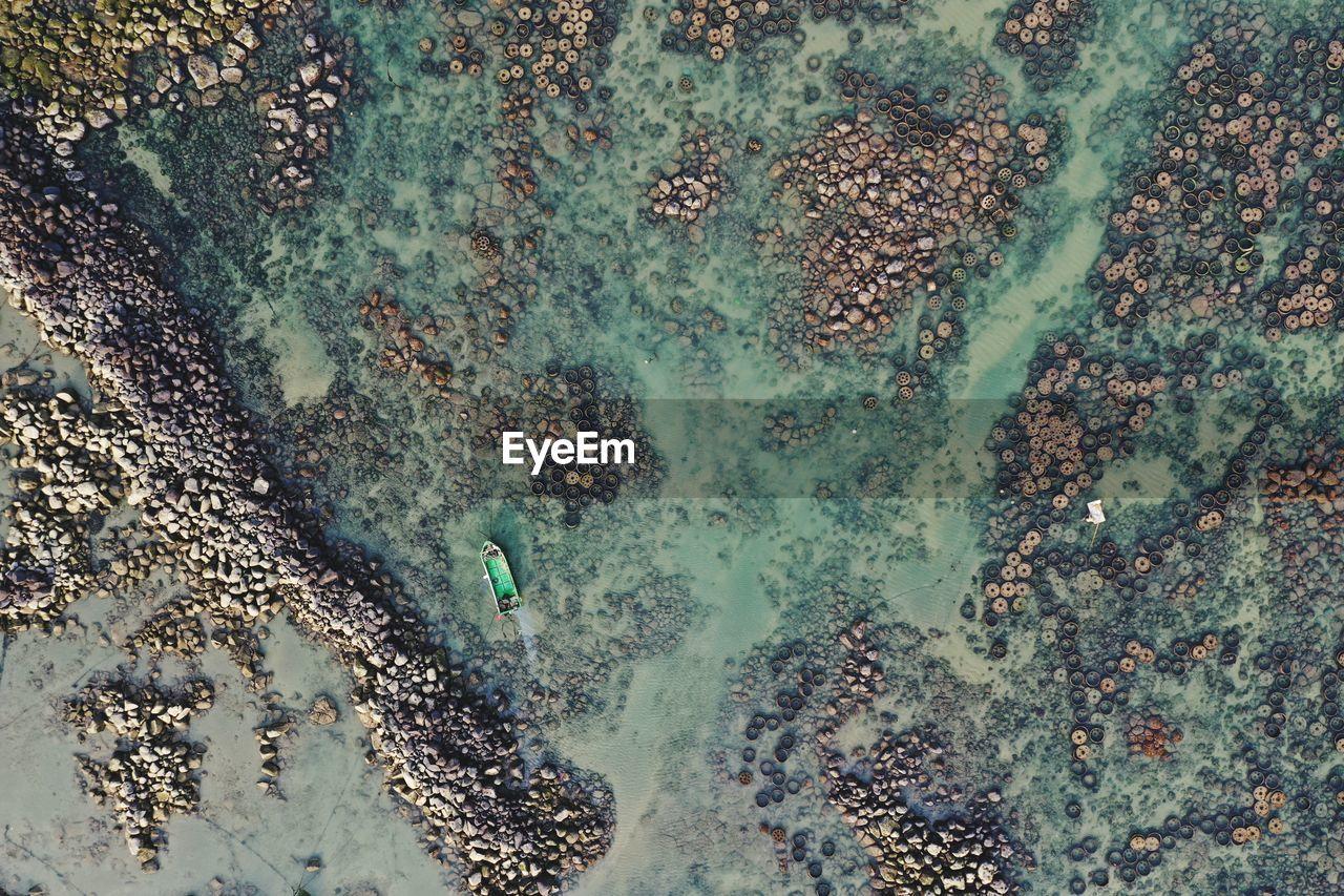 HIGH ANGLE VIEW OF STARFISH ON SEA
