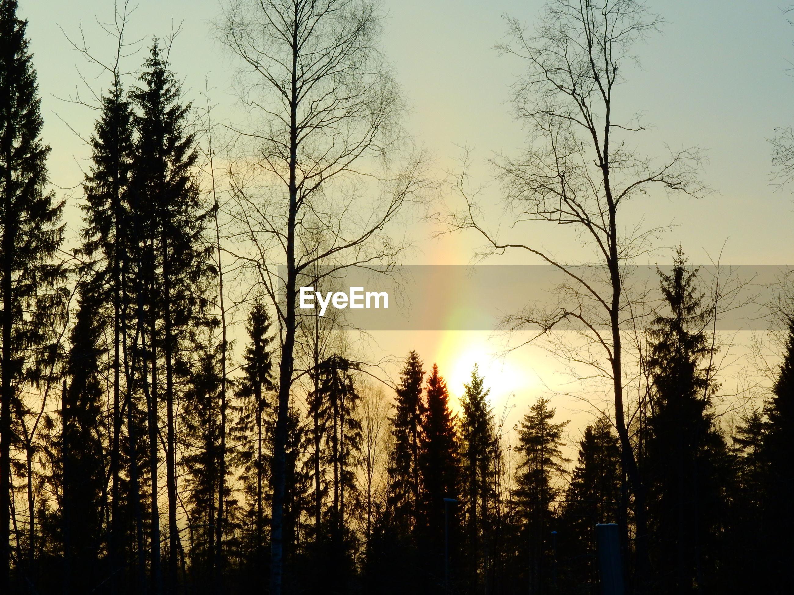 Silhouette trees against sky during dusk