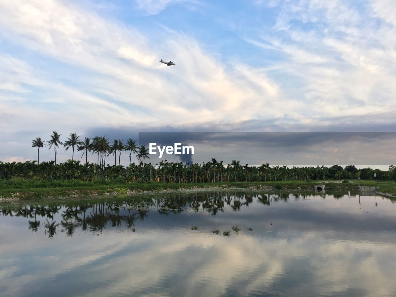 sky, water, cloud - sky, reflection, beauty in nature, scenics - nature, plant, waterfront, nature, flying, tranquility, tree, lake, tranquil scene, no people, animal themes, animal, growth, day, outdoors