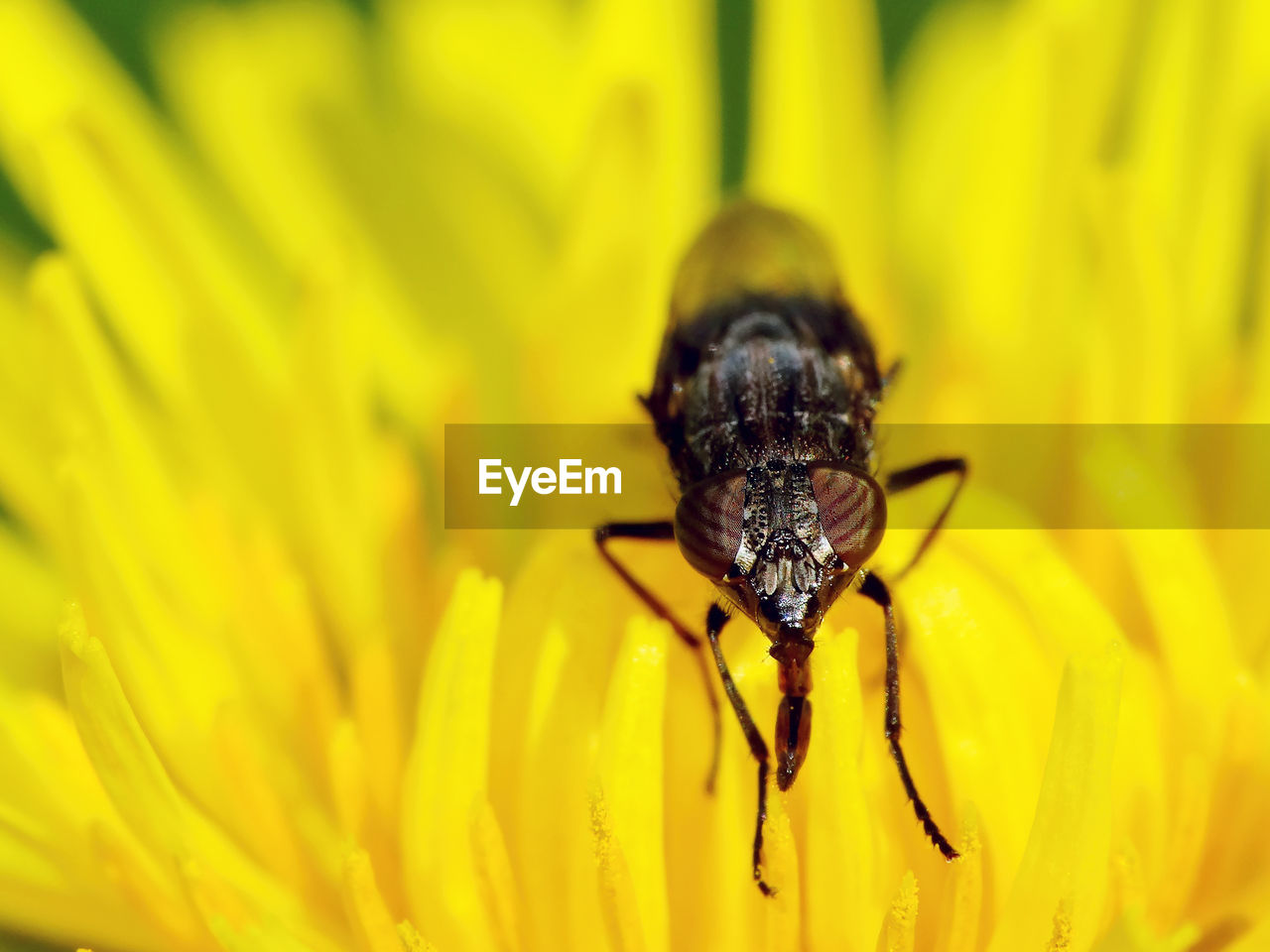 yellow, invertebrate, animal themes, flowering plant, insect, one animal, flower, animal, fragility, animal wildlife, animals in the wild, petal, vulnerability, flower head, close-up, beauty in nature, plant, inflorescence, pollen, growth, no people, pollination, outdoors