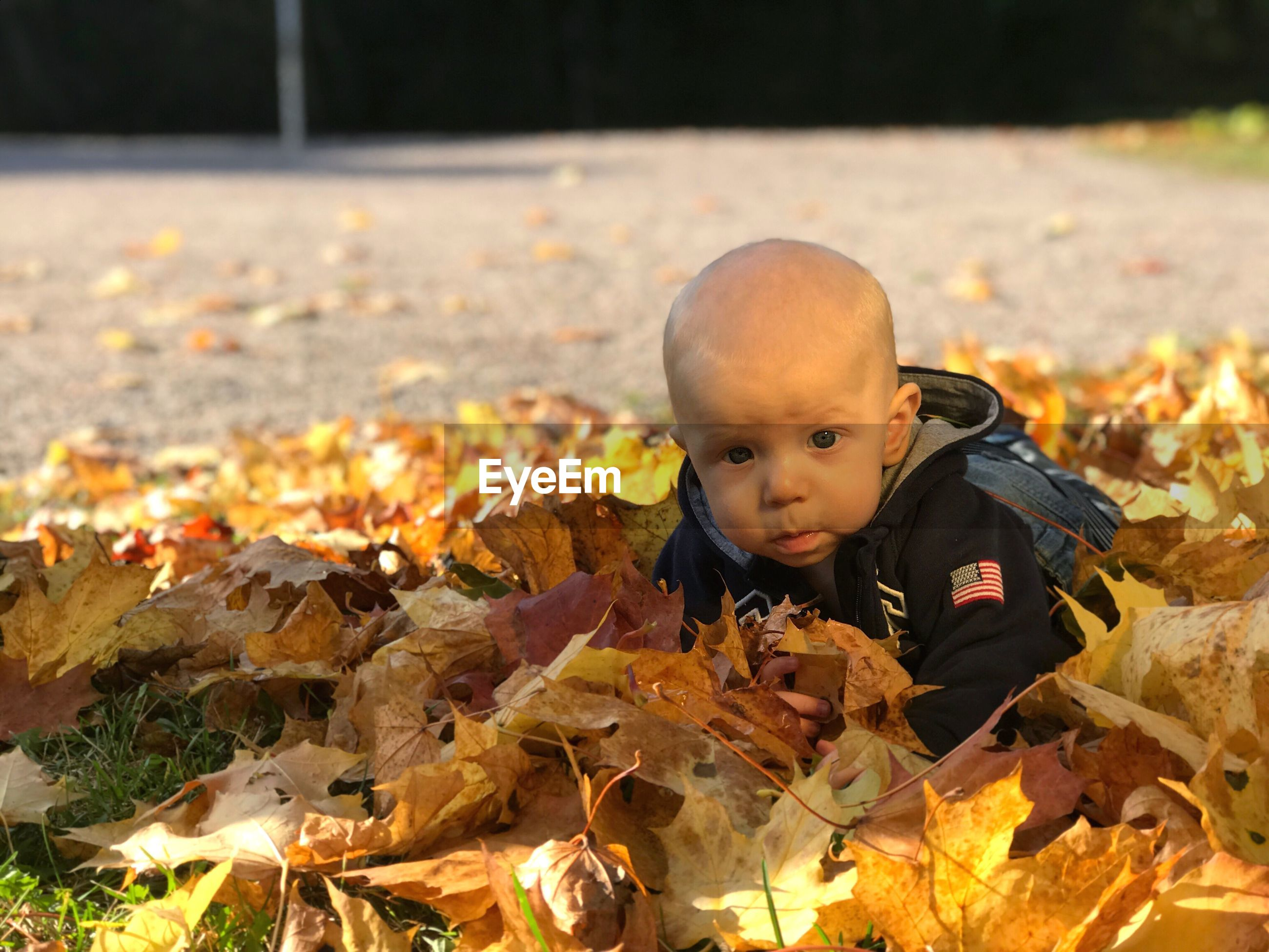 Portrait of cute baby boy on autumn leaves