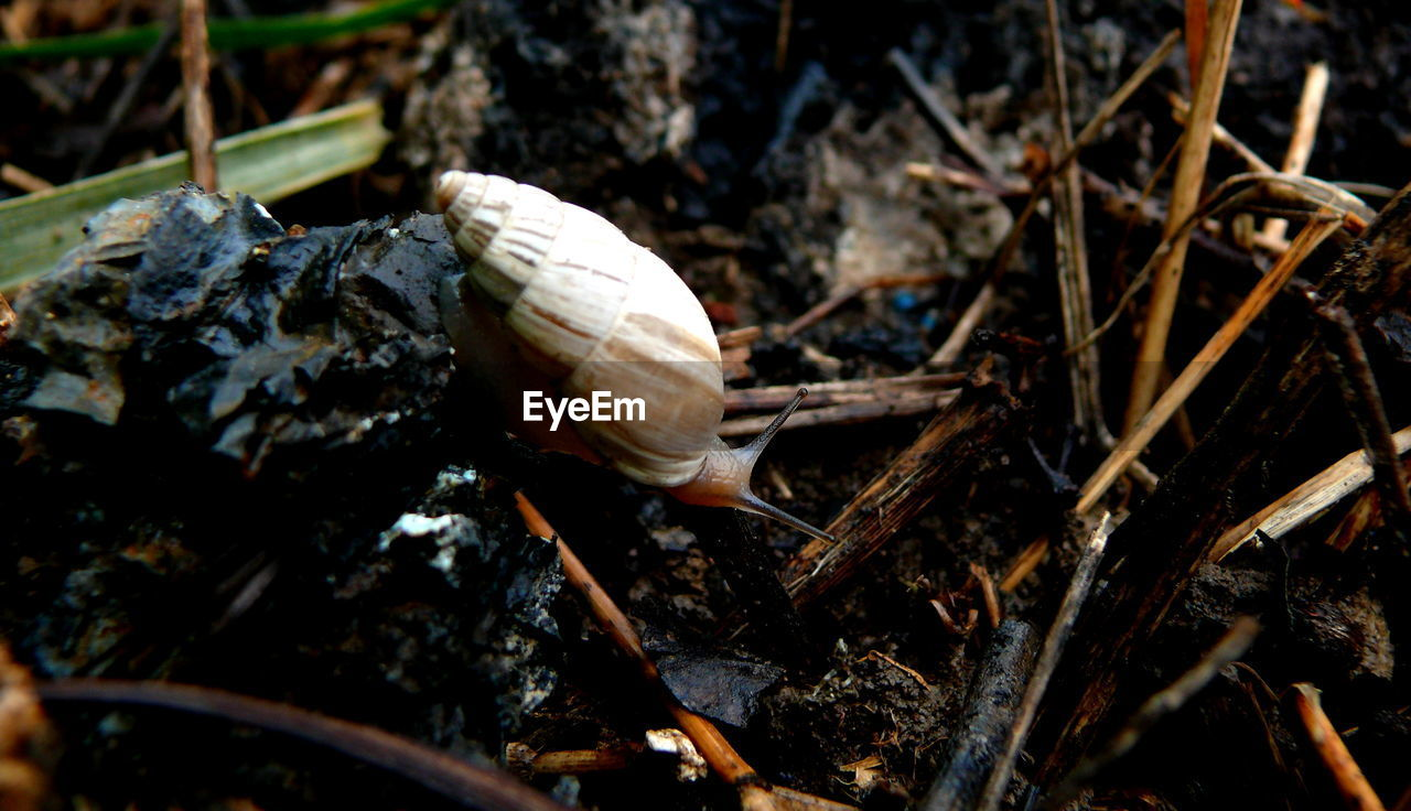 snail, one animal, fragility, animal themes, nature, gastropod, close-up, animals in the wild, no people, day, outdoors, mushroom, animal wildlife, beauty in nature, fly agaric, toadstool