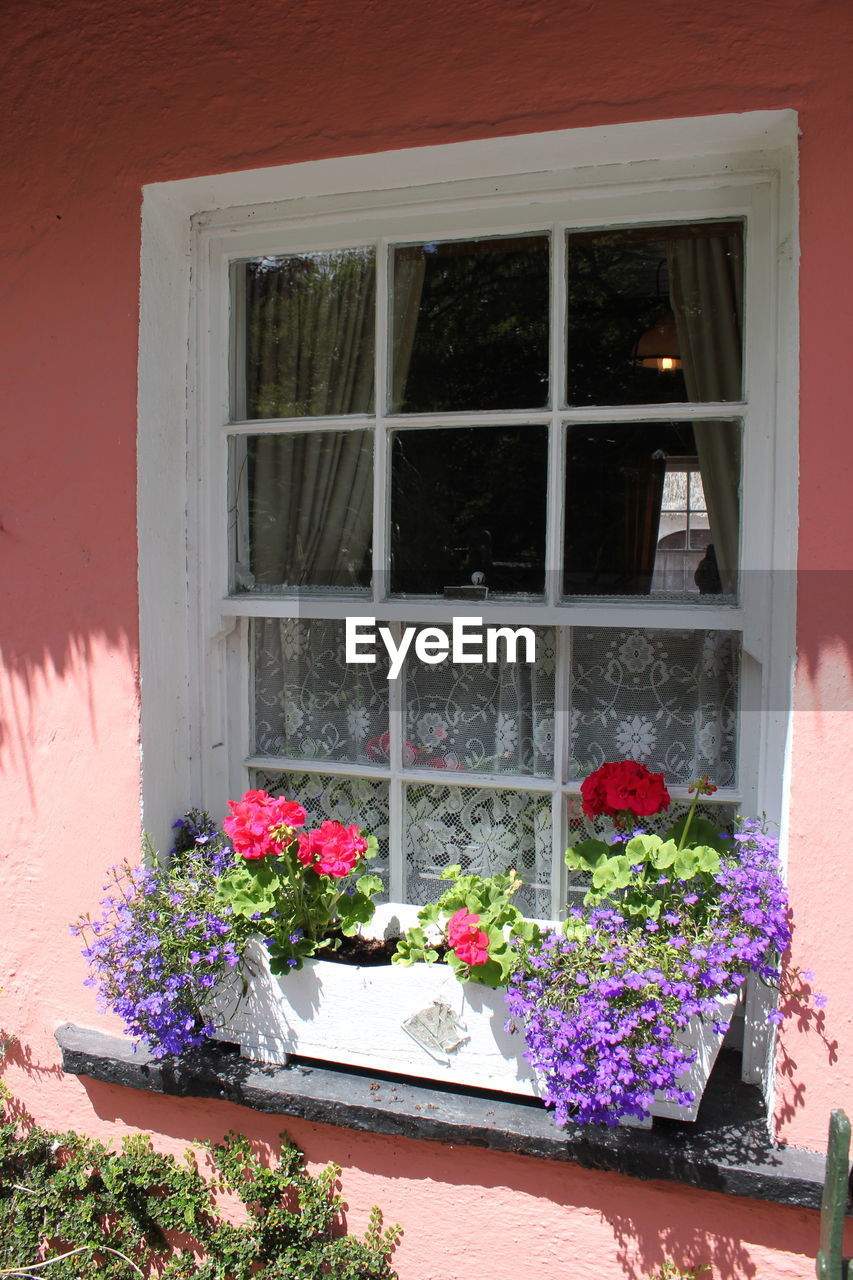window, flower, plant, no people, growth, day, potted plant, nature, architecture, built structure, outdoors, building exterior, window box, beauty in nature, fragility