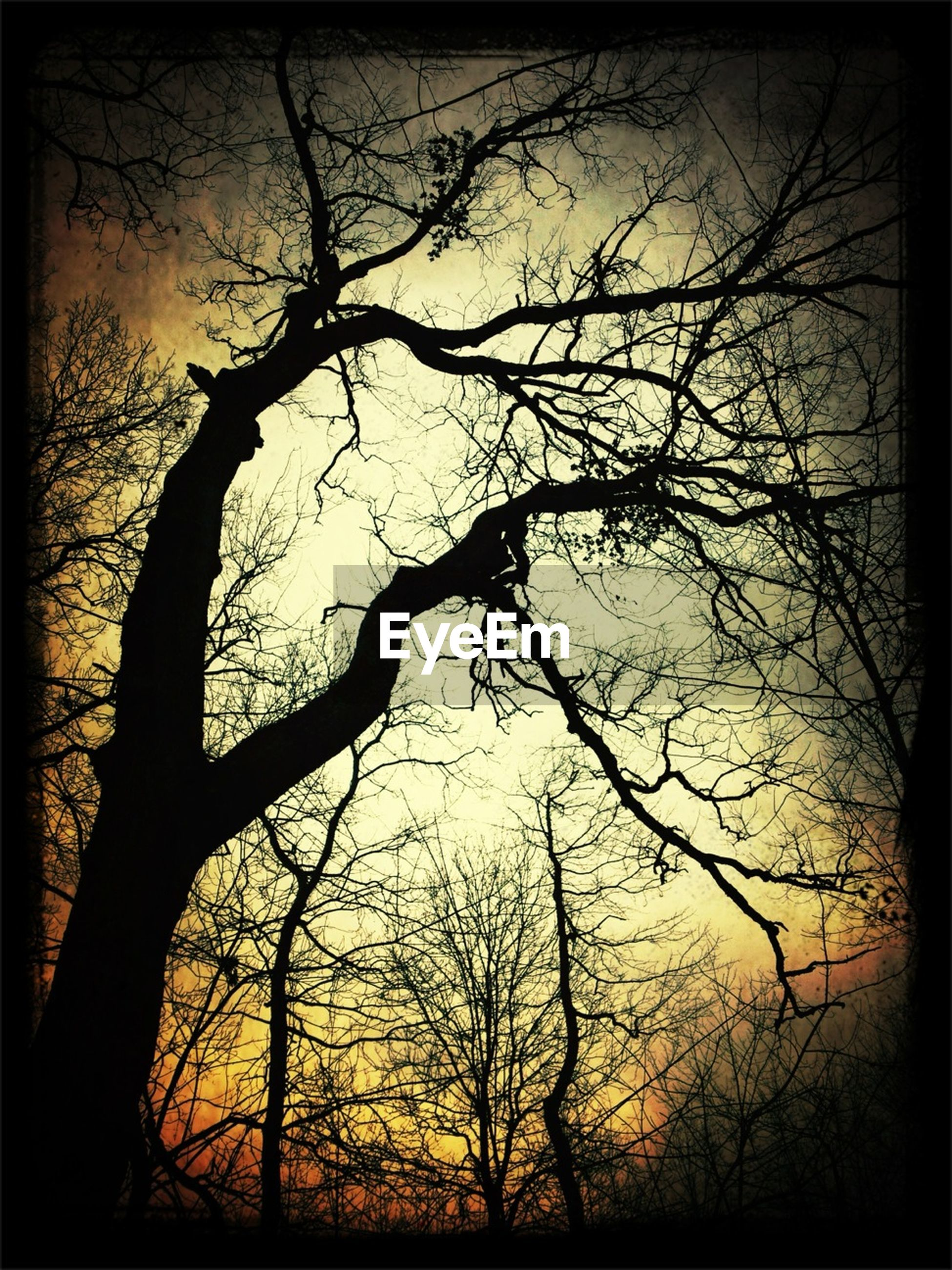 bare tree, branch, tree, silhouette, sunset, transfer print, tranquility, nature, beauty in nature, scenics, sky, tranquil scene, auto post production filter, low angle view, tree trunk, orange color, no people, growth, outdoors, dusk