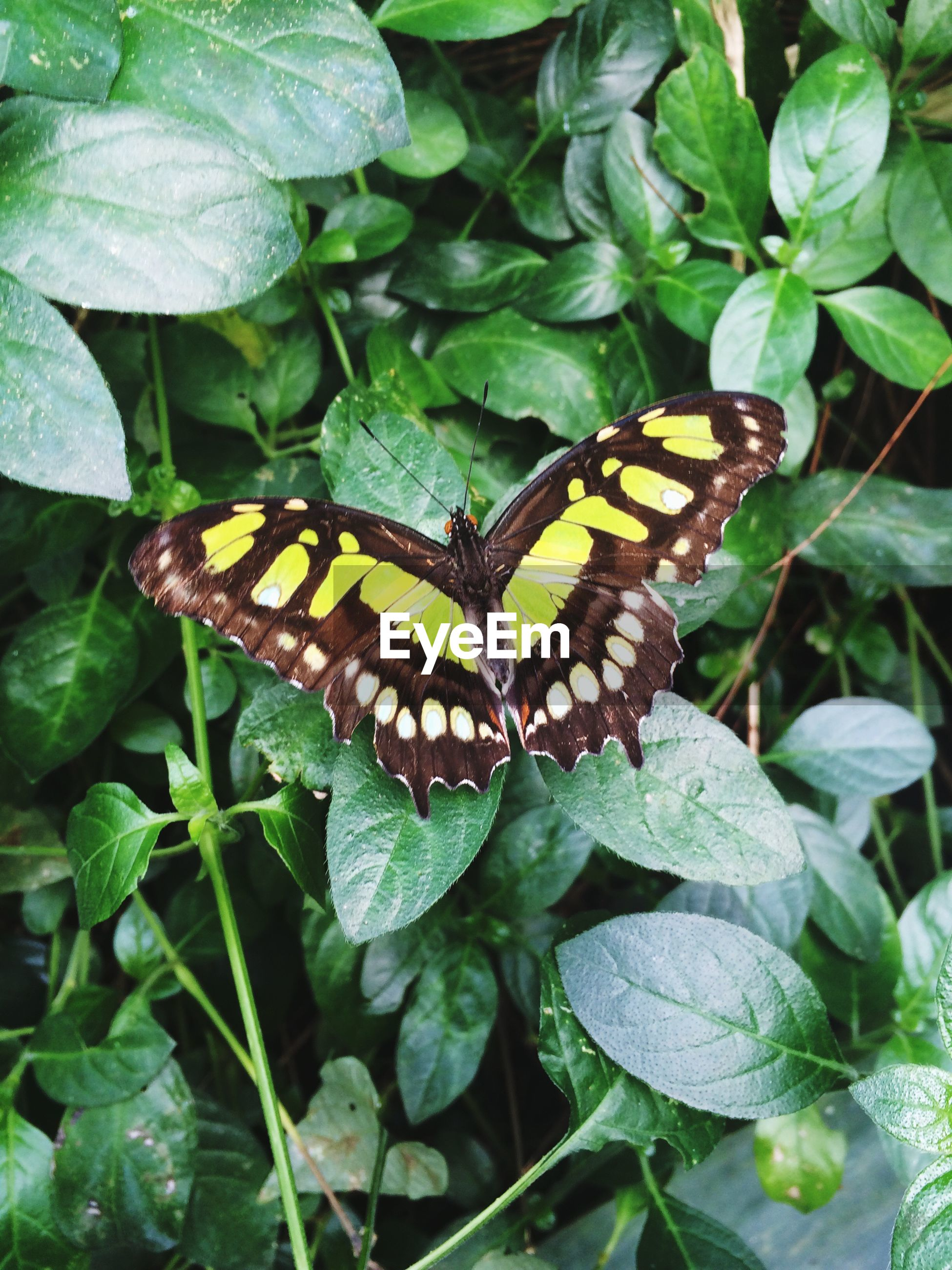 animals in the wild, animal themes, one animal, insect, wildlife, leaf, green color, plant, butterfly - insect, high angle view, close-up, nature, animal markings, growth, butterfly, focus on foreground, beauty in nature, natural pattern, outdoors, day