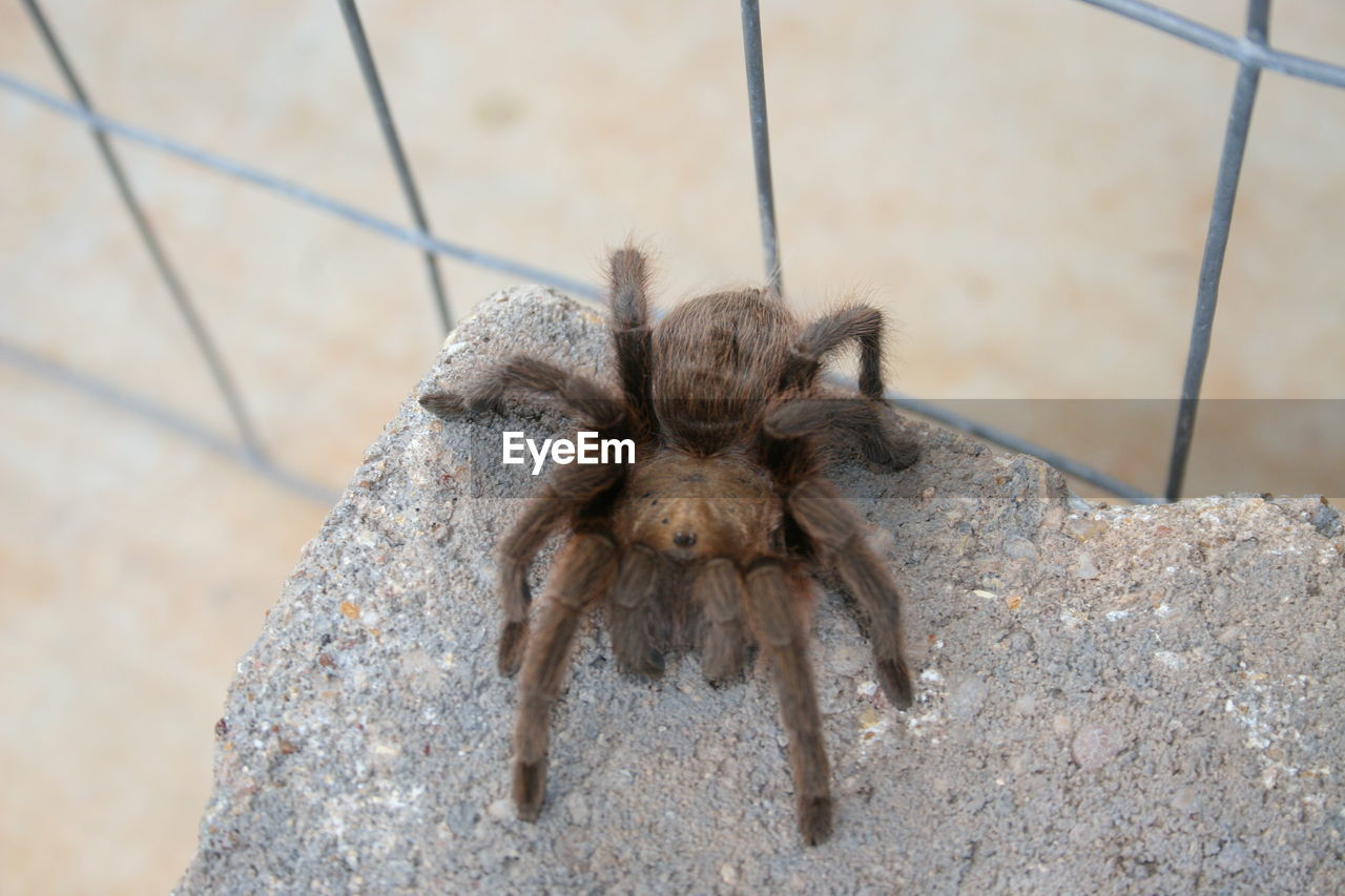 animal themes, one animal, animals in the wild, animal, animal wildlife, arachnid, close-up, invertebrate, arthropod, no people, spider, insect, day, solid, rock, nature, rock - object, animal body part, outdoors, focus on foreground