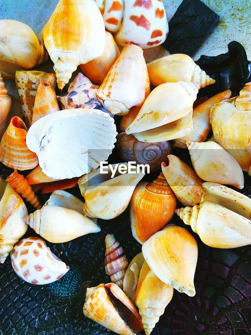 food, food and drink, healthy eating, wellbeing, close-up, no people, freshness, large group of objects, high angle view, abundance, still life, day, animal wildlife, shell, vegetable, animal, outdoors, nature, animal shell