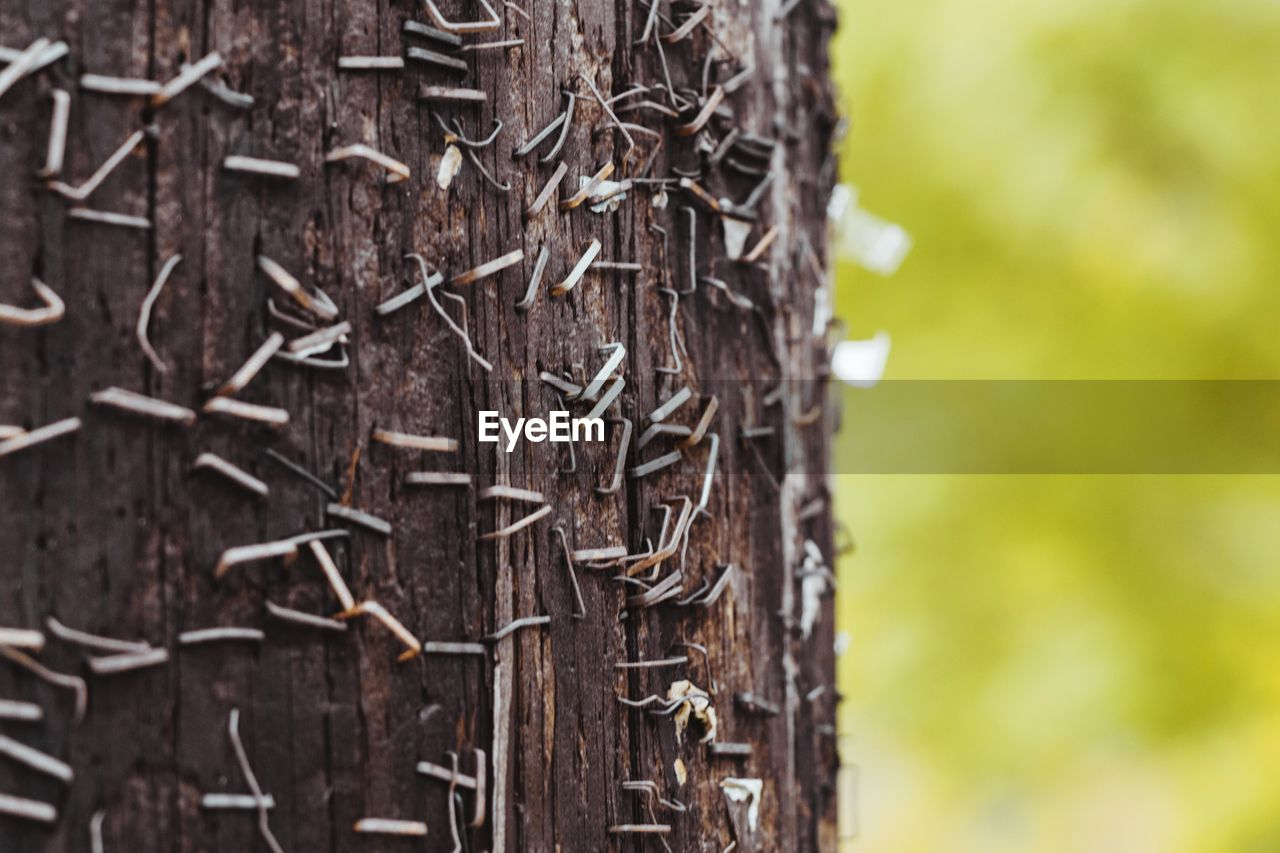 tree, close-up, focus on foreground, plant, tree trunk, trunk, no people, day, textured, selective focus, nature, wood - material, outdoors, brown, pattern, plant bark, rough, growth, tranquility, beauty in nature, bark