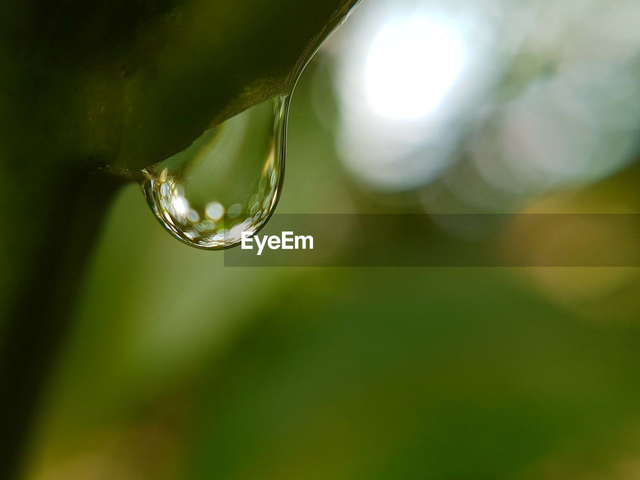 nature, drop, beauty in nature, focus on foreground, green color, close-up, no people, growth, water, outdoors, leaf, day, plant, purity, fragility, freshness, tree