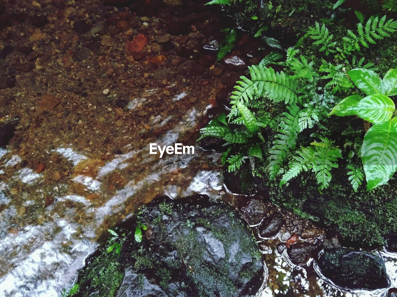 growth, nature, moss, plant, water, no people, outdoors, rock - object, tranquility, day, beauty in nature, leaf, close-up