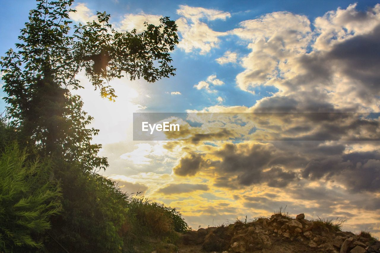 cloud - sky, sky, plant, tree, beauty in nature, tranquility, tranquil scene, scenics - nature, no people, nature, growth, non-urban scene, outdoors, day, low angle view, land, sunset, idyllic, landscape, environment