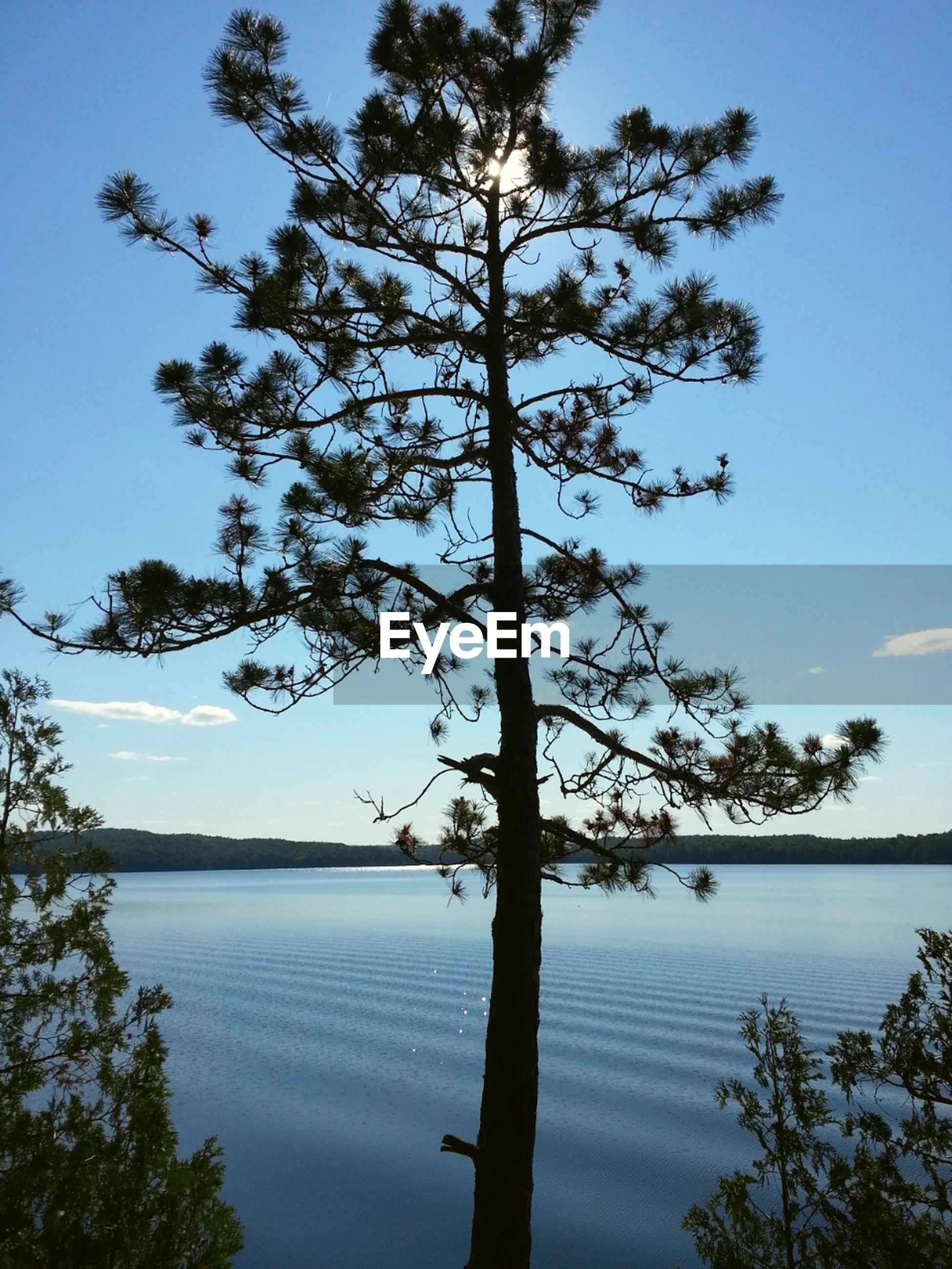 tree, water, tranquility, tranquil scene, scenics, beauty in nature, lake, blue, silhouette, nature, branch, reflection, clear sky, sky, idyllic, tree trunk, growth, calm, no people, outdoors