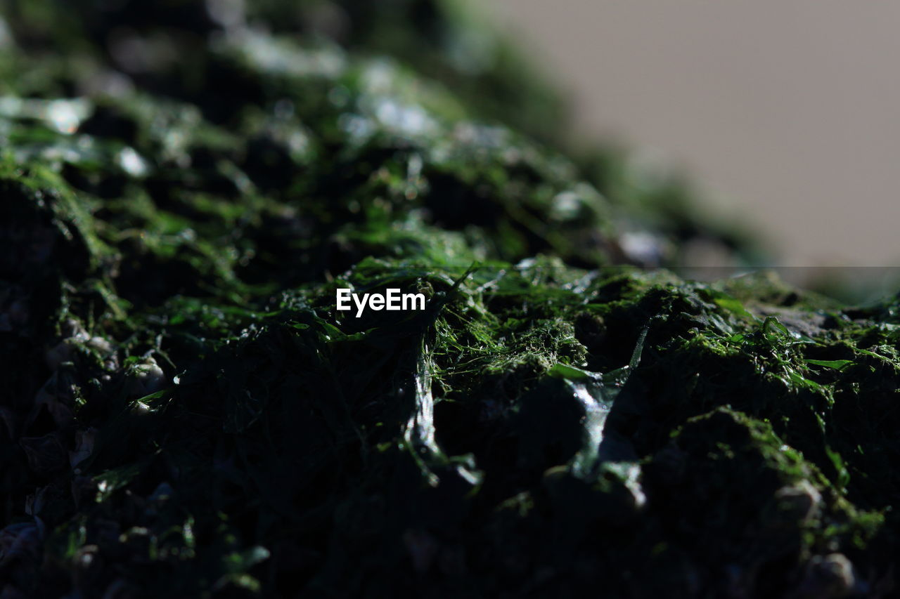 Close-Up Of Plant Growing In Moss