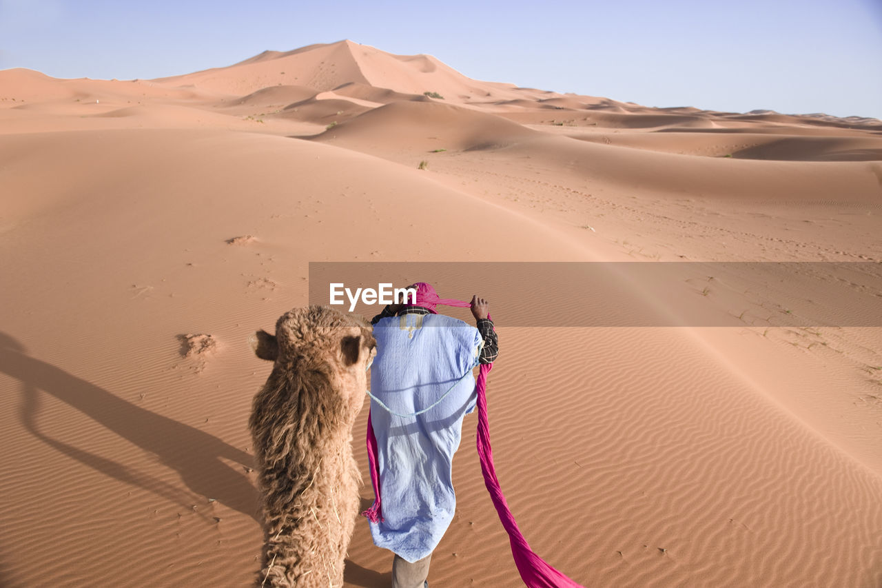 Rear View Of Man Walking With Camel At Desert
