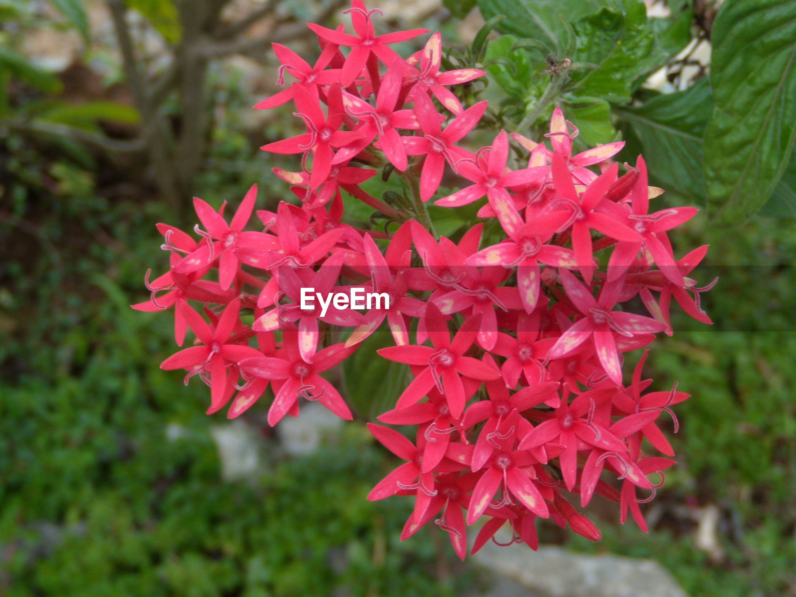 flower, growth, red, freshness, focus on foreground, beauty in nature, close-up, fragility, nature, plant, petal, leaf, selective focus, pink color, park - man made space, blooming, day, green color, outdoors, flower head