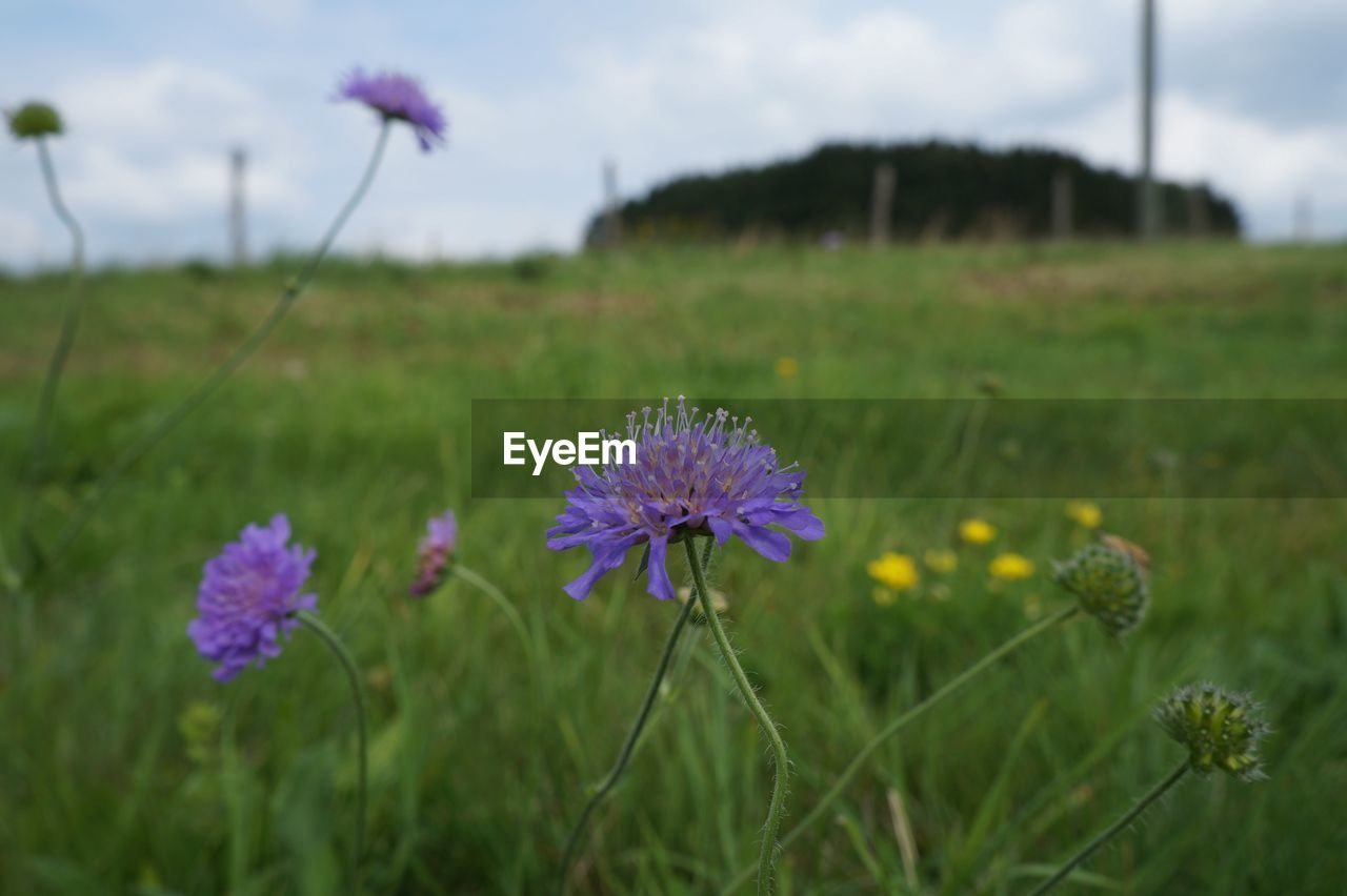 flower, growth, field, nature, fragility, beauty in nature, plant, flower head, petal, freshness, blooming, focus on foreground, day, outdoors, no people, rural scene, close-up, grass, agriculture, sky, crocus