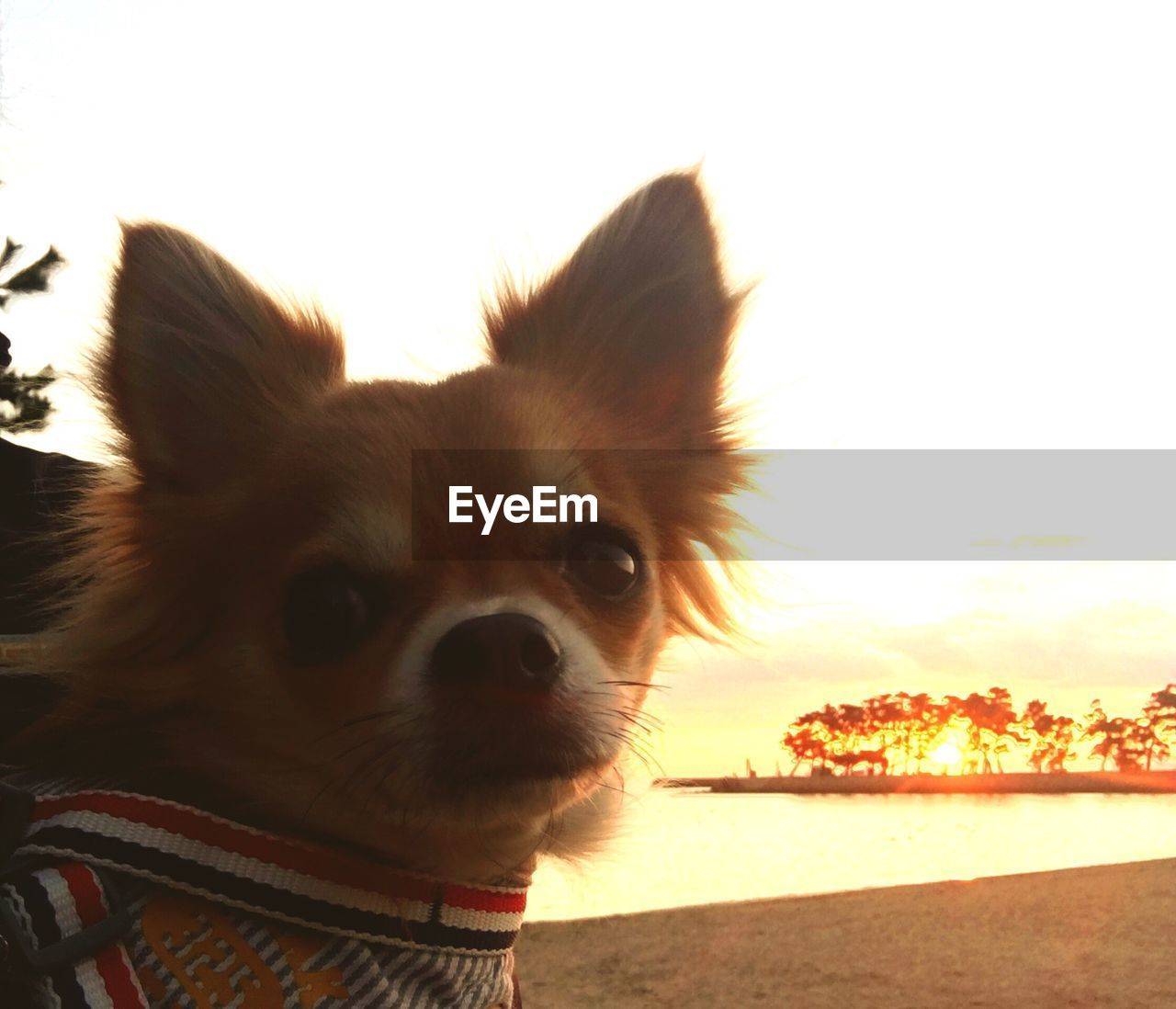 dog, one animal, pets, domestic animals, animal themes, mammal, close-up, no people, outdoors, sky, day, nature