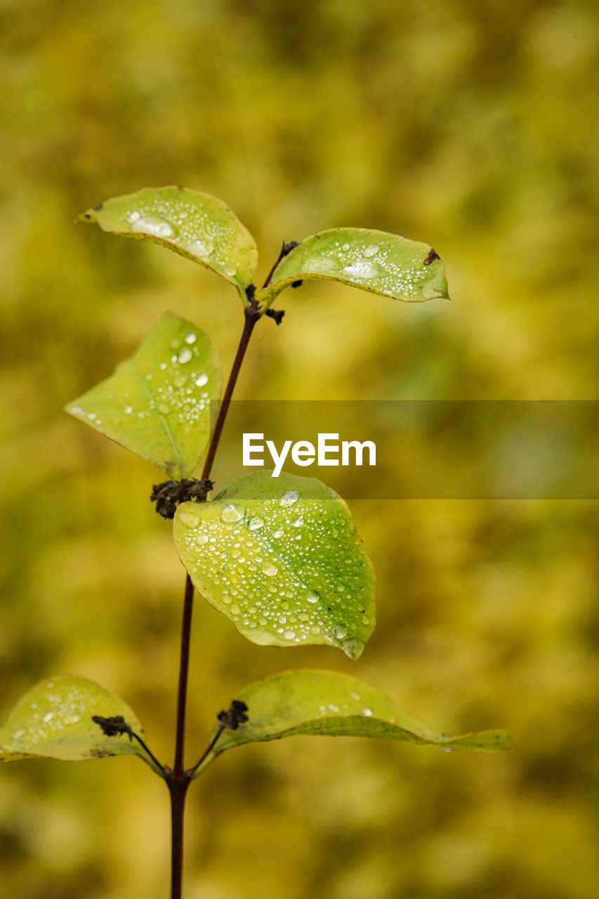 plant, growth, close-up, beauty in nature, leaf, no people, plant part, green color, focus on foreground, nature, freshness, day, outdoors, drop, water, vulnerability, fragility, flower, selective focus, dew