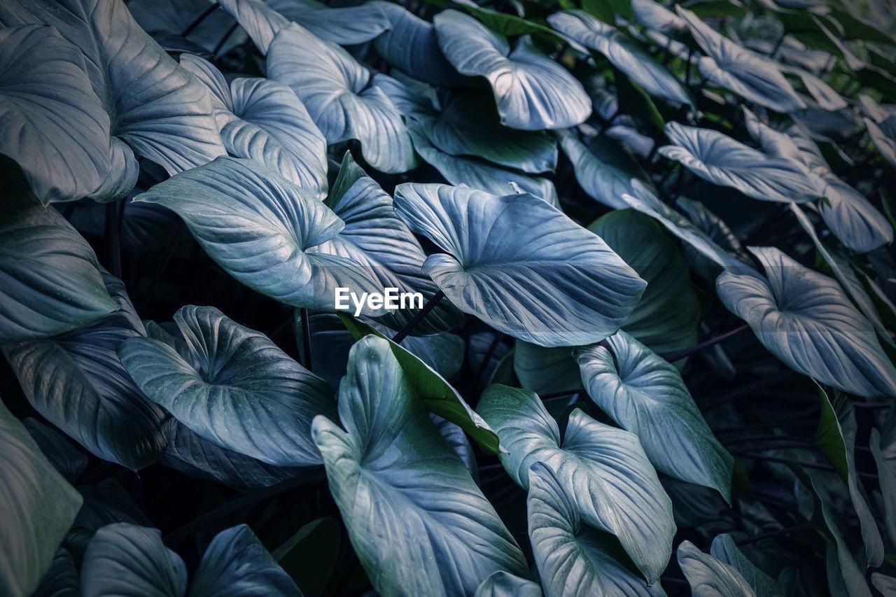 Full frame shot of leaves outdoors