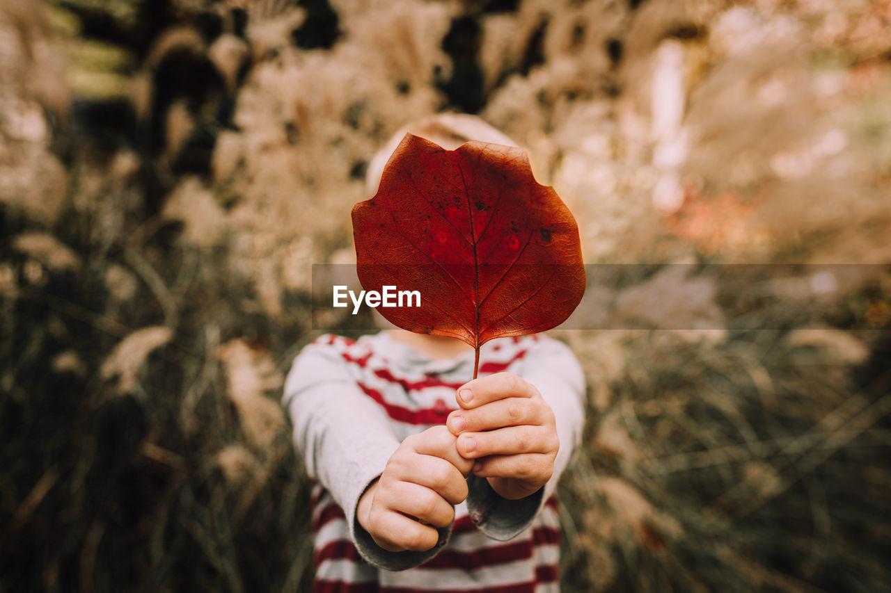 Boy Holding Dry Leaf Against Tree